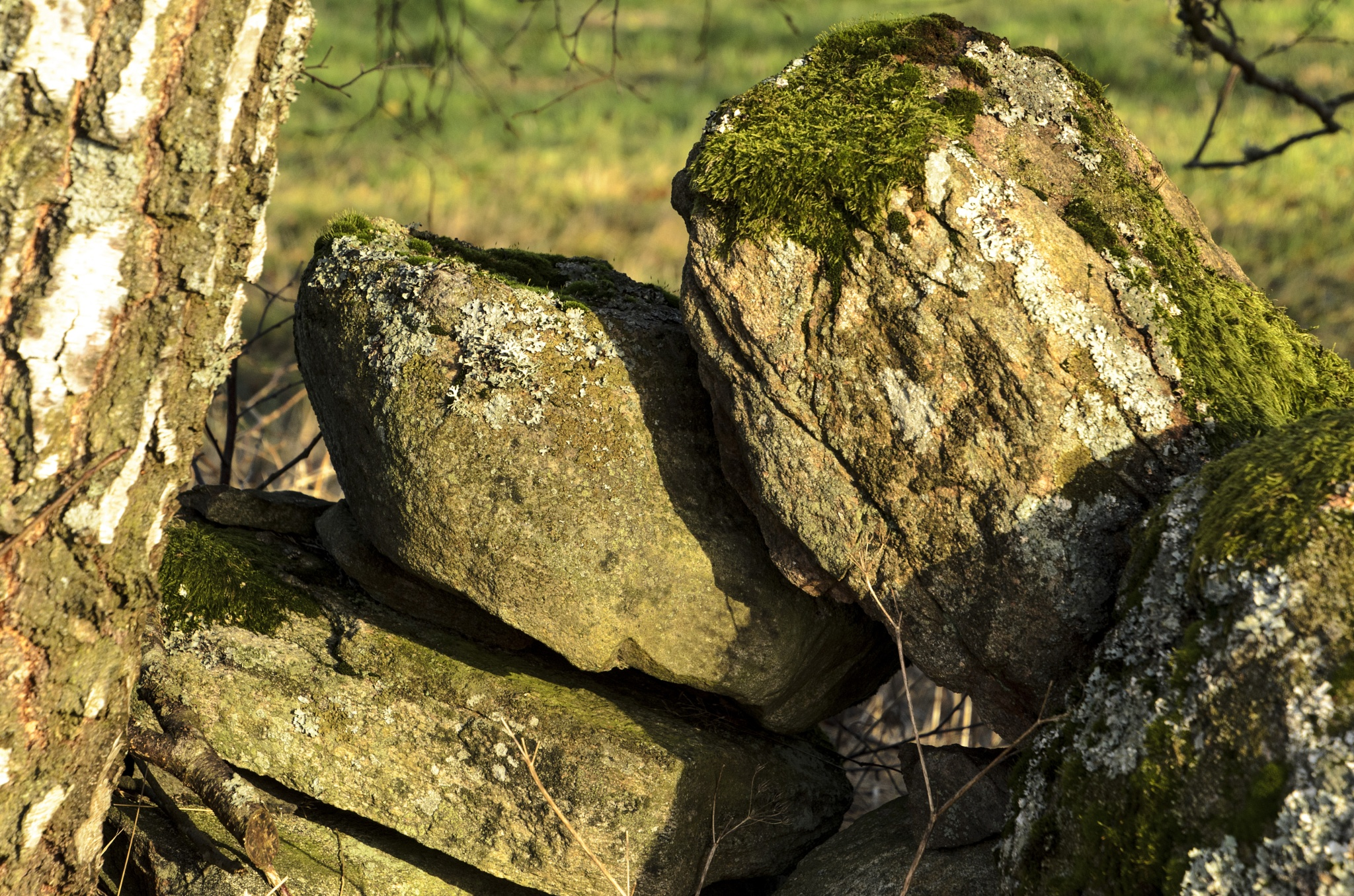 Stone in a stone wall around a field farmed by any farmer. by Johnny Lythell