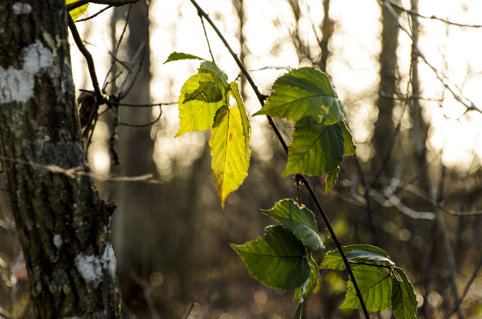 Leaves in the sun by Johnny Lythell