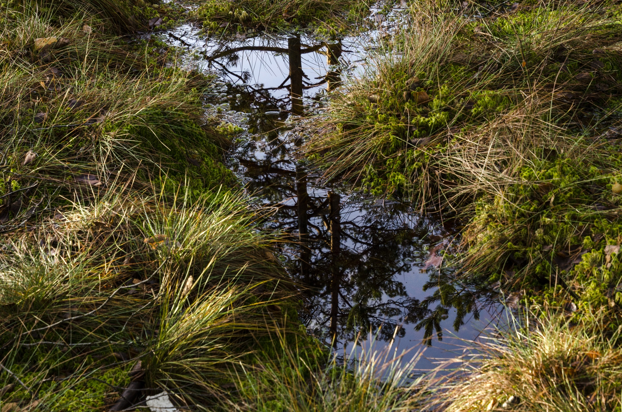 Reflective of trees in the water by Johnny Lythell