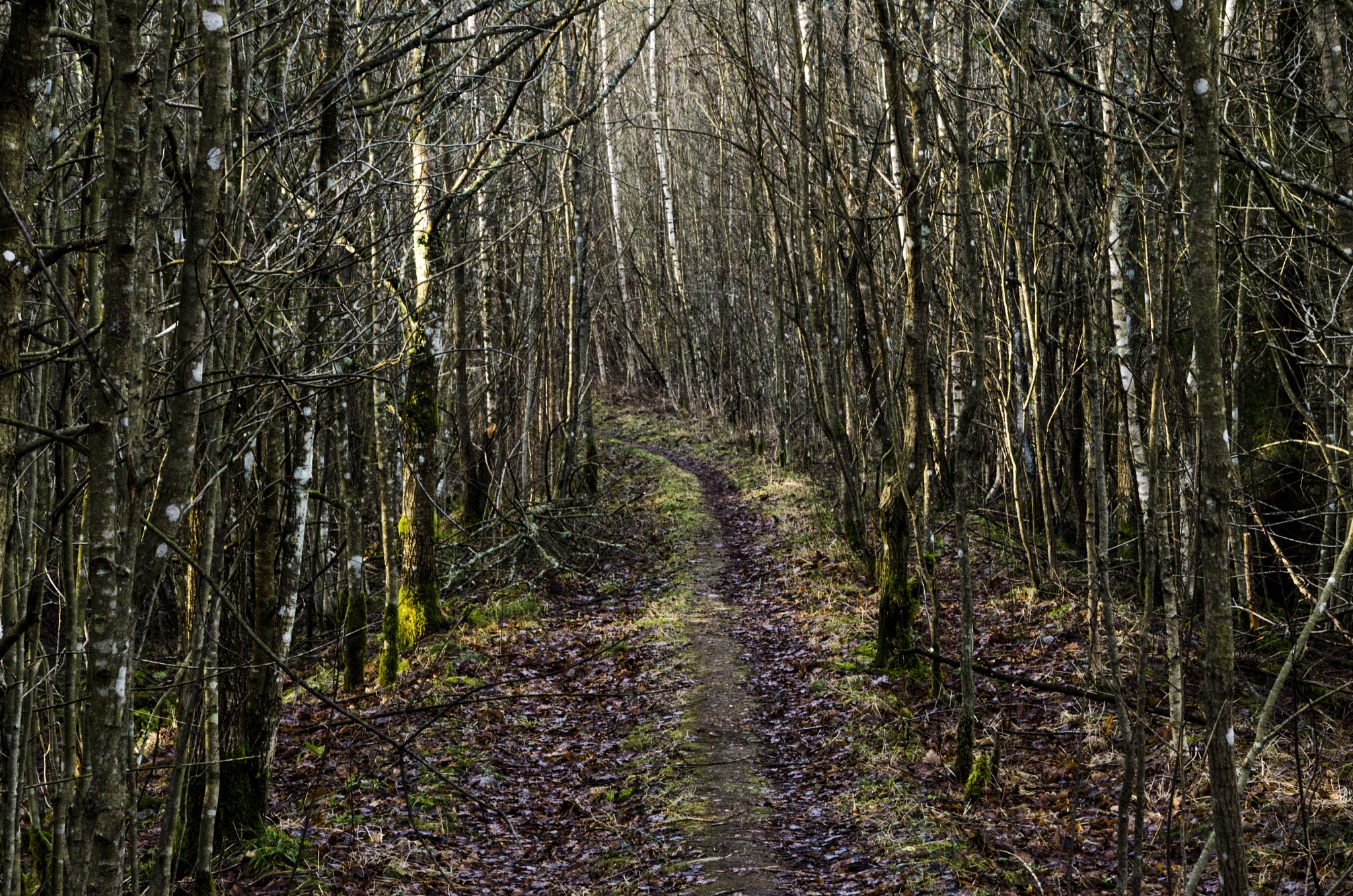 Hiking trail by Johnny Lythell