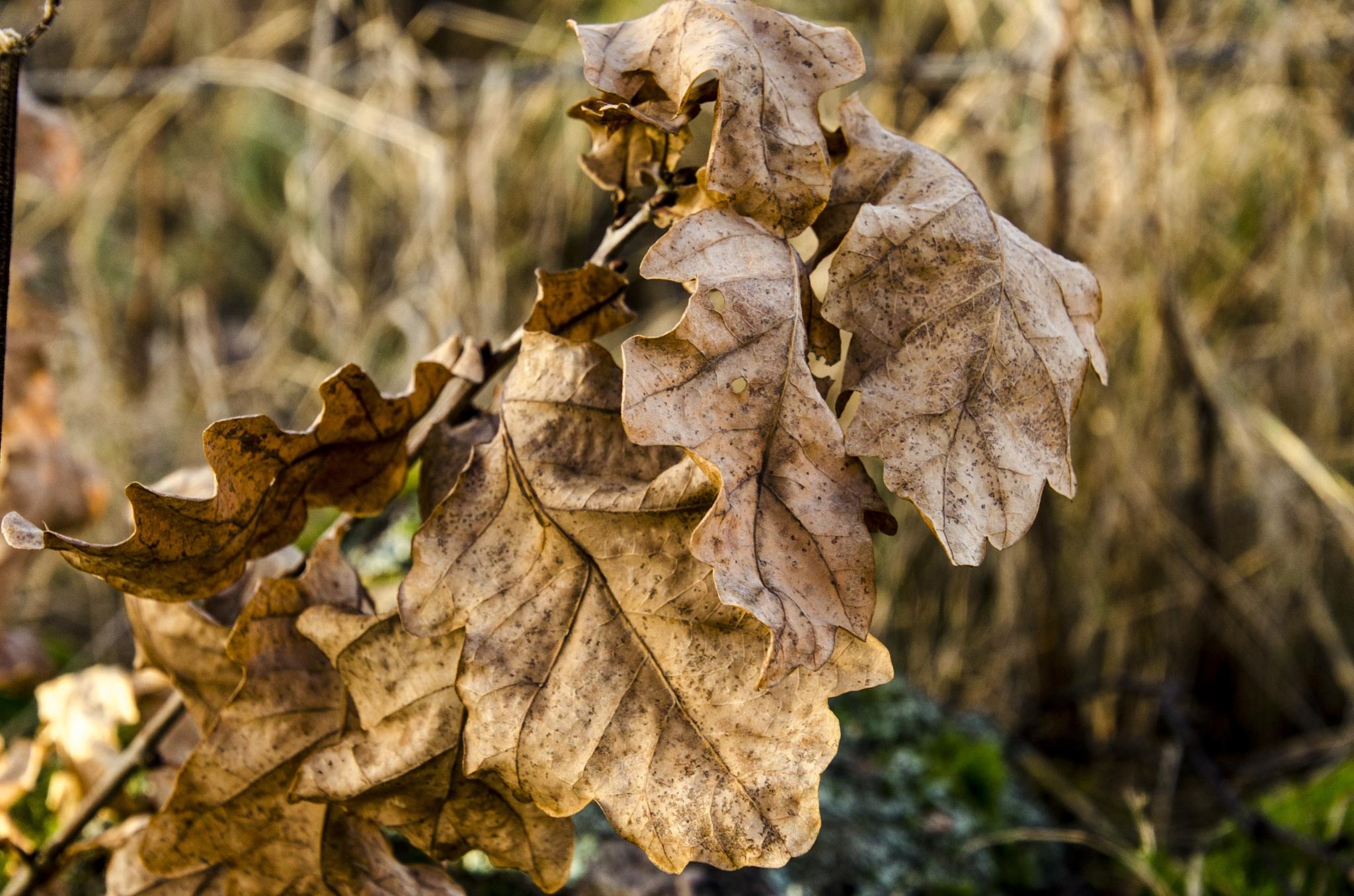 Autumn leaf by Johnny Lythell