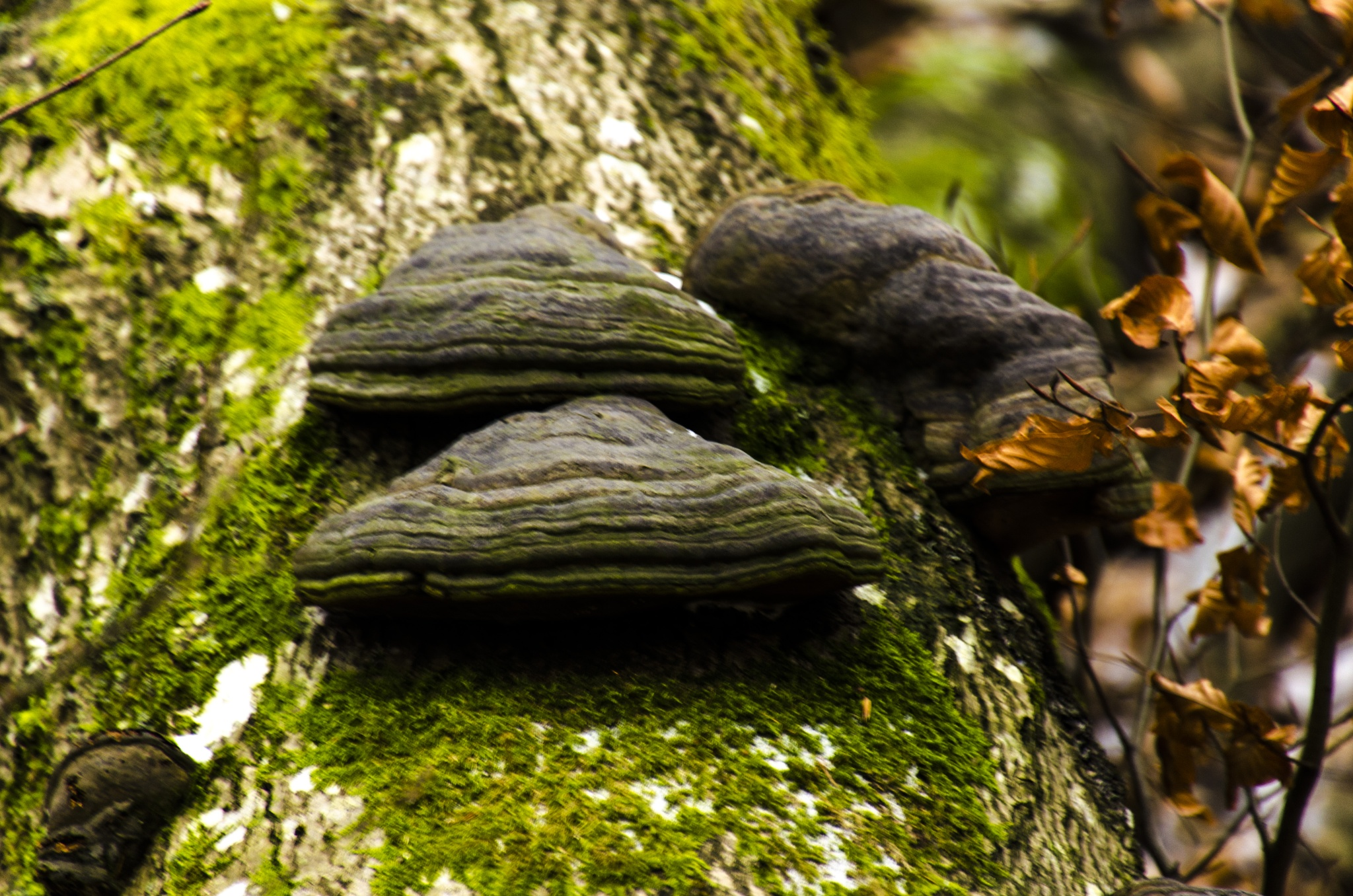 Fungus that grows on trees by Johnny Lythell