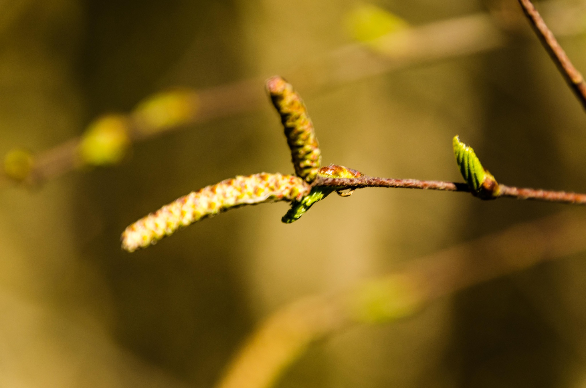 Signs of spring by Johnny Lythell