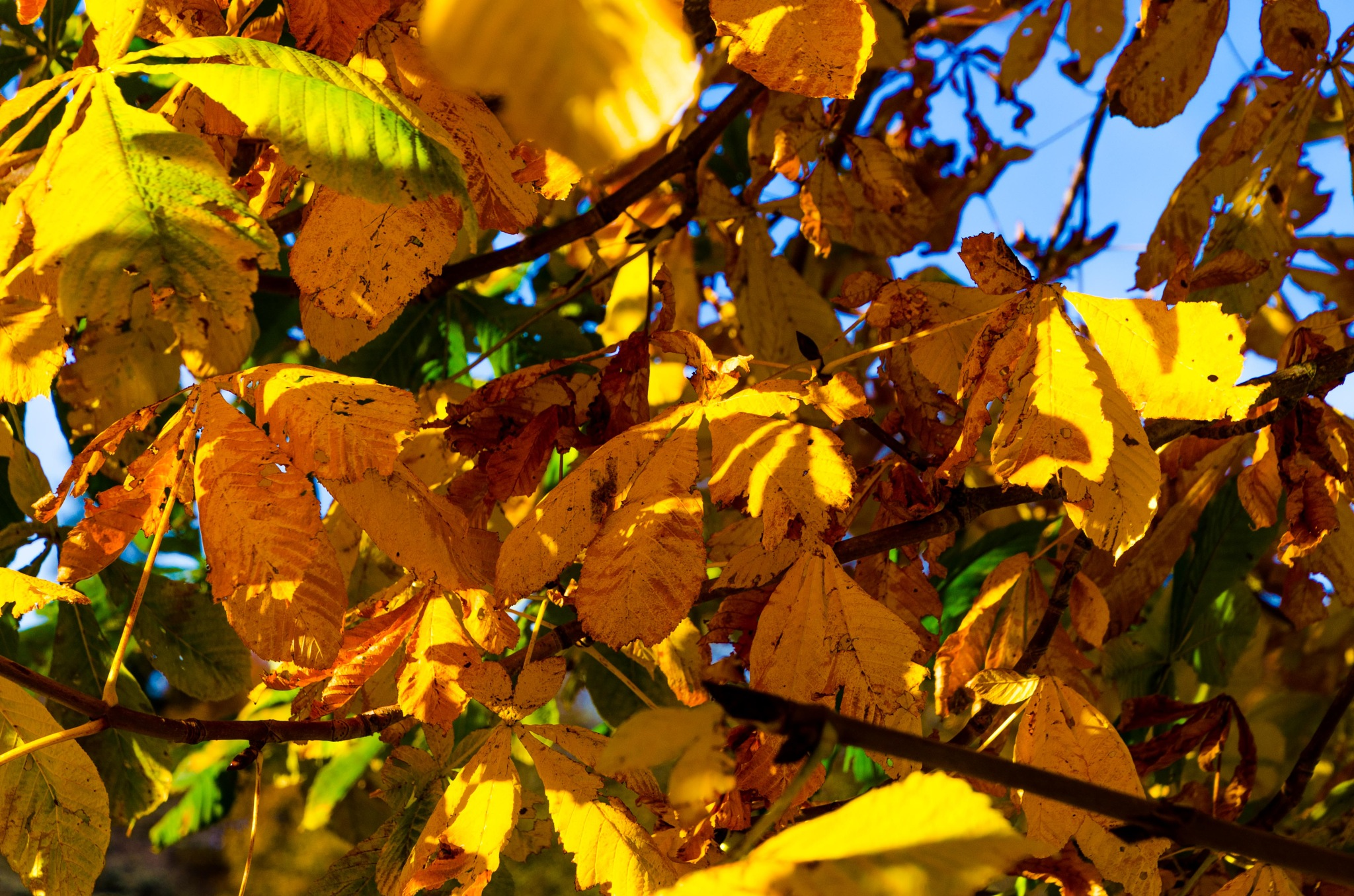 Leaves in autumn colors by Johnny Lythell