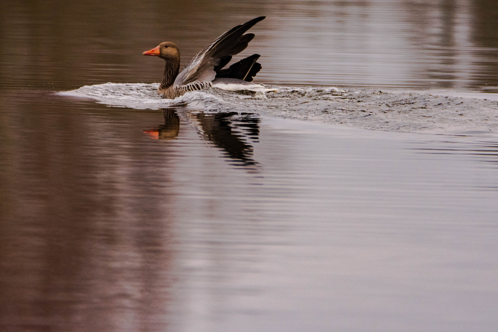 Landing  by Johnny Lythell