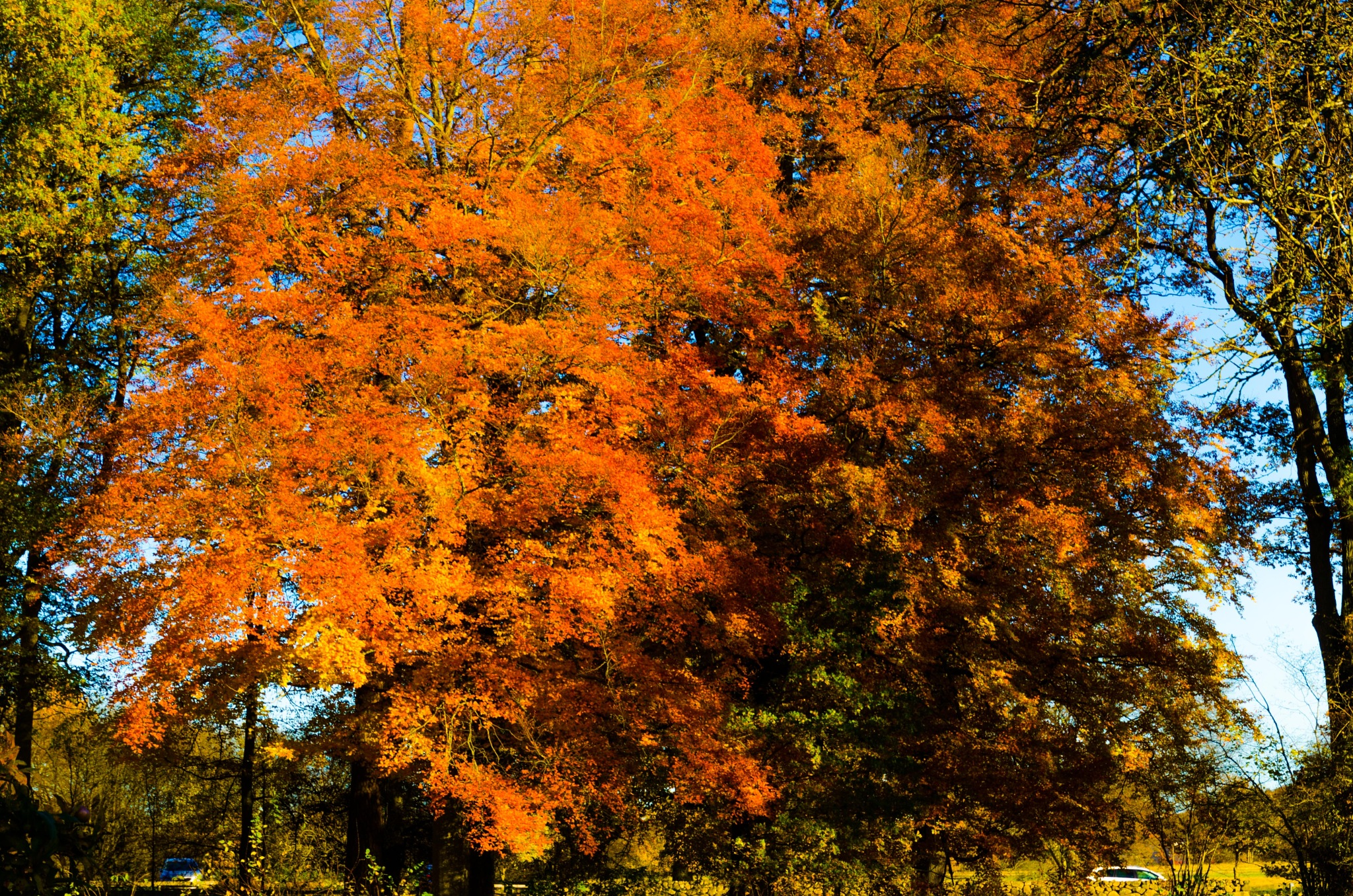 Autumn colors by Johnny Lythell