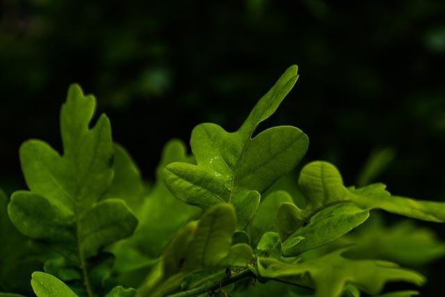 Leaf by Johnny Lythell