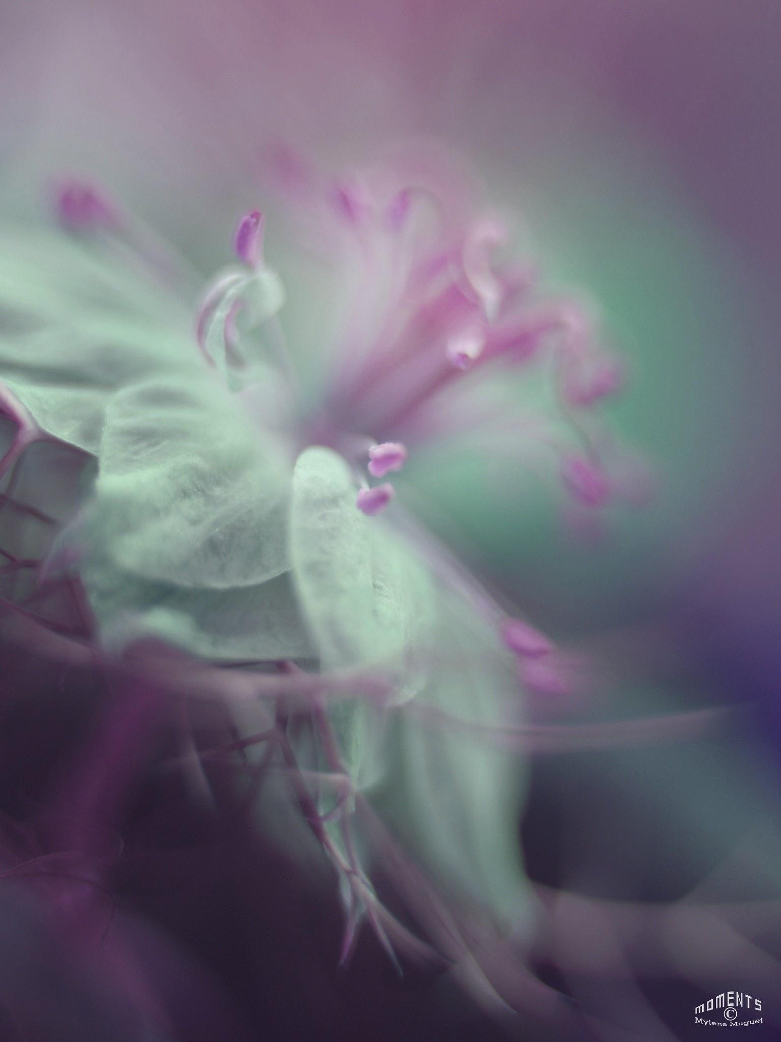 Fairy Flower ~ I by Mylena