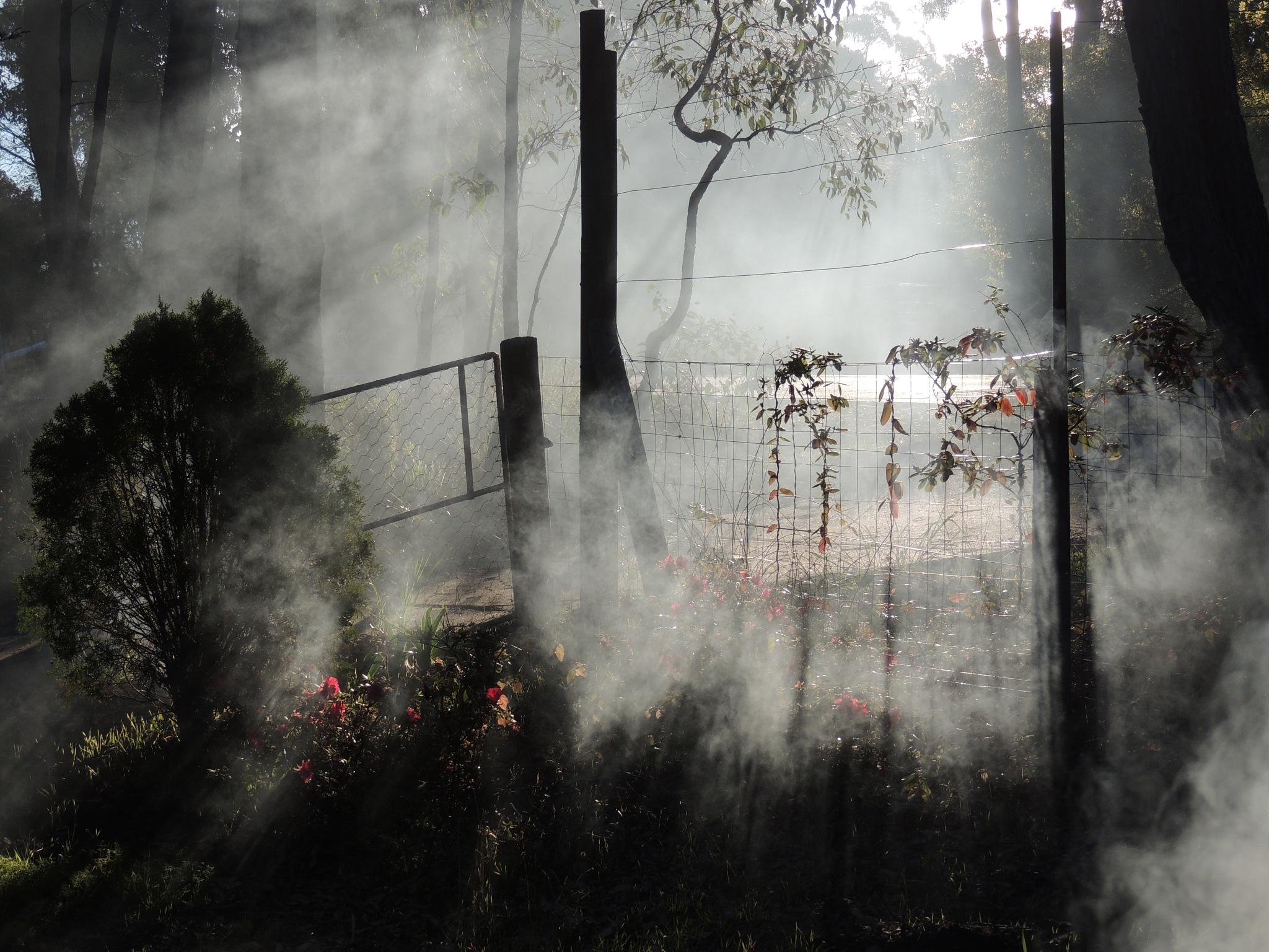 X043 Morning mist by Jeremy Holton