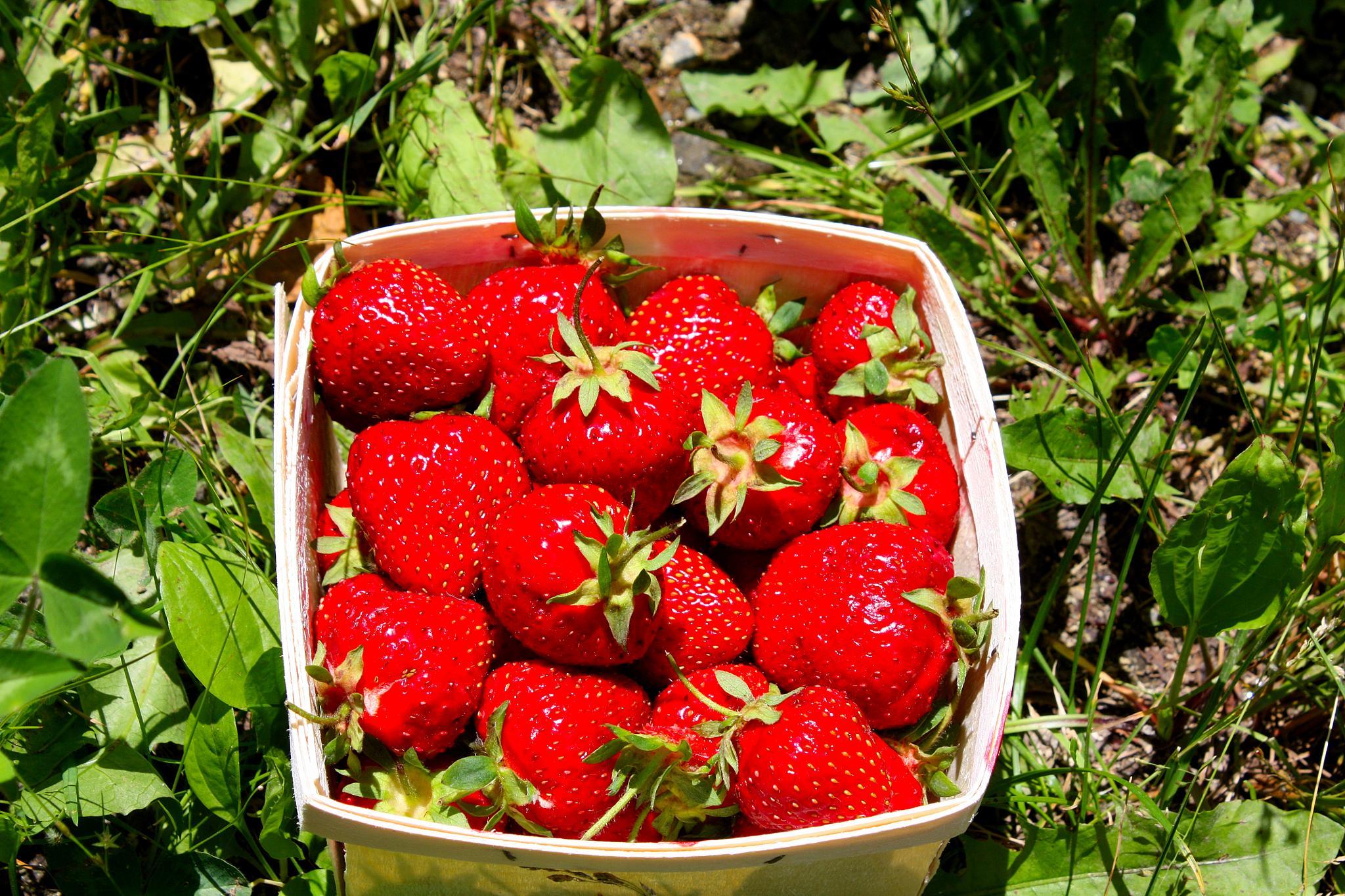 Fresh Strawberries by Caiti Kennedy