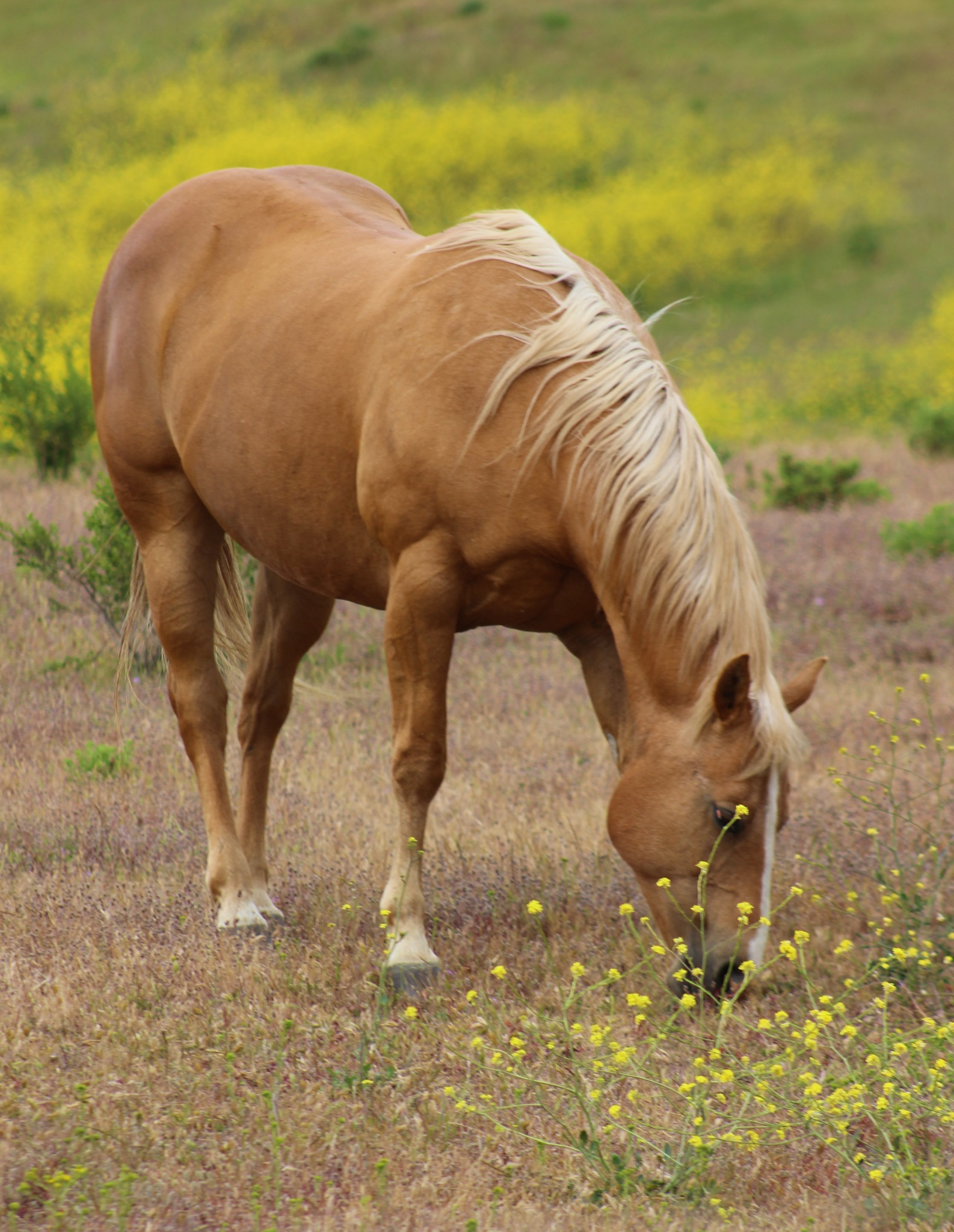 Beautiful Horse.. by derek.oliver3