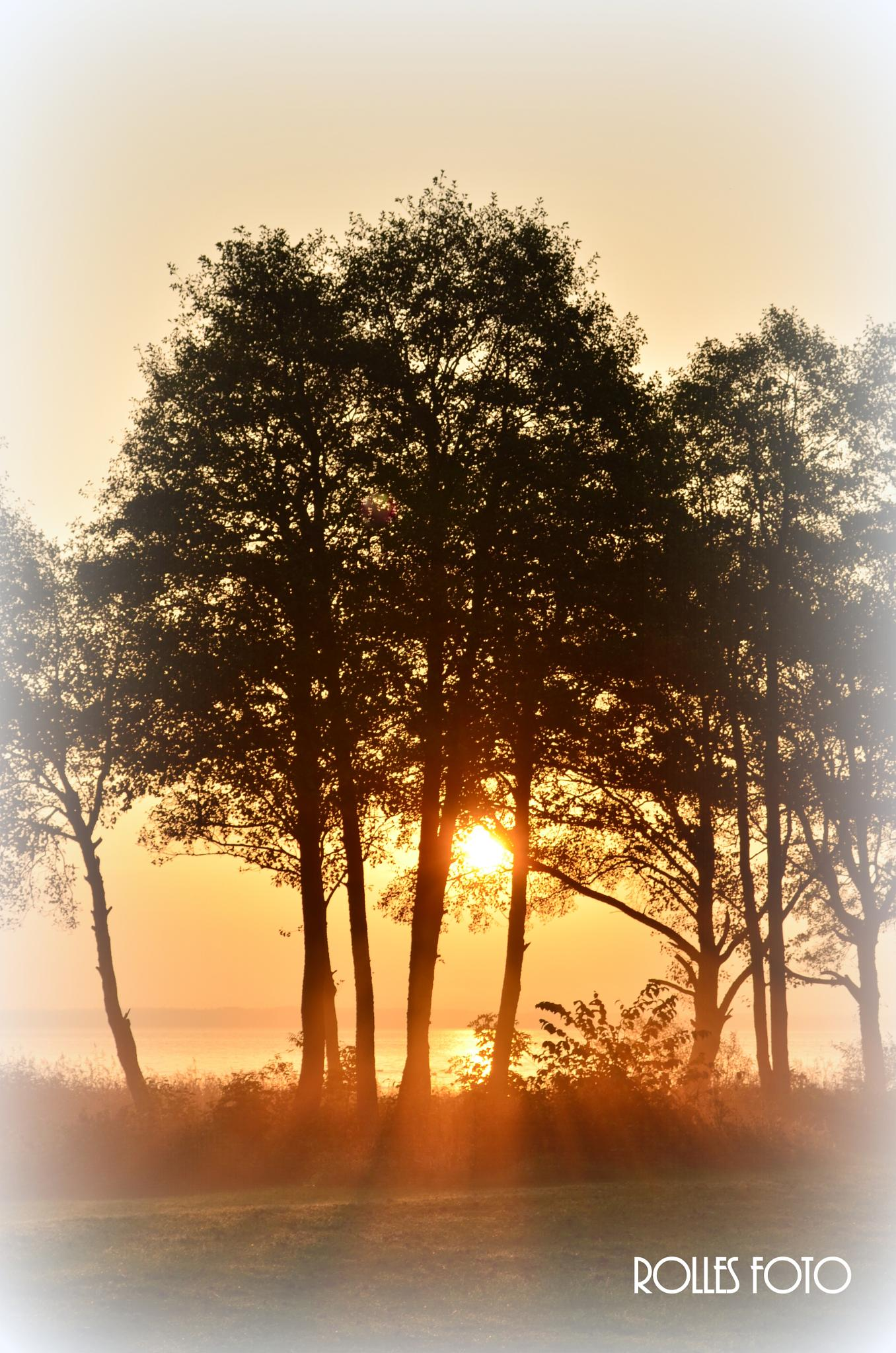 Morning by rollepersson