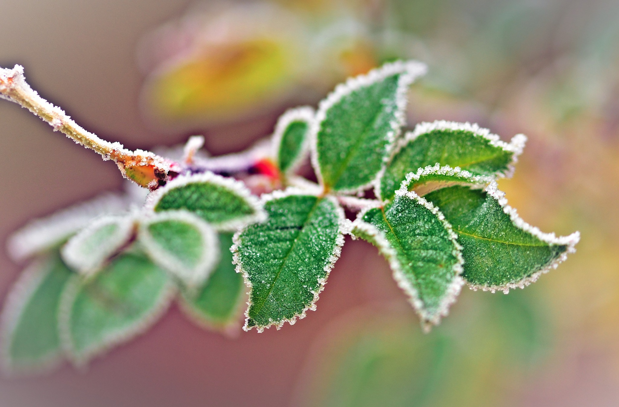 Hip leaves by rollepersson