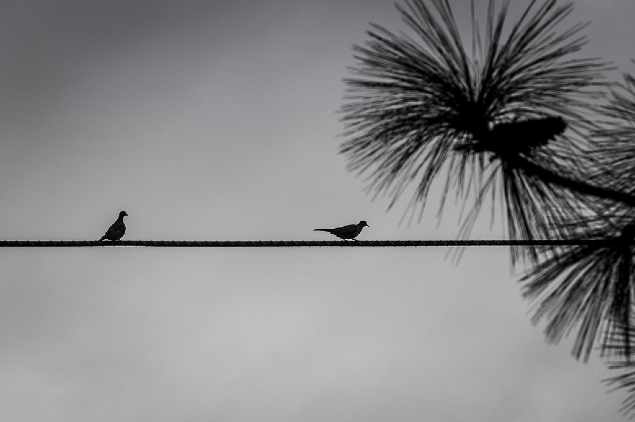 birds on a wire by wacissa