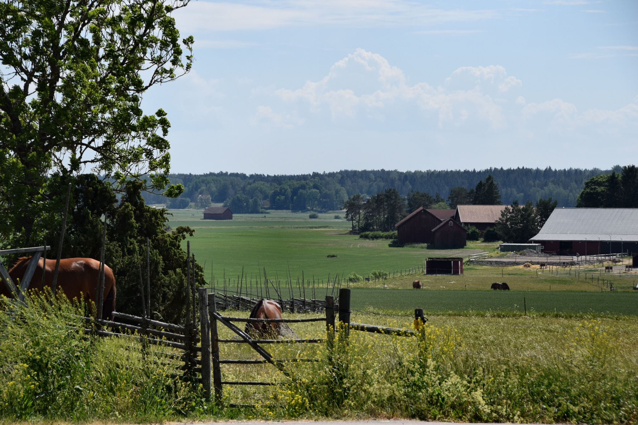Swedish countryside by yvonne.frisen