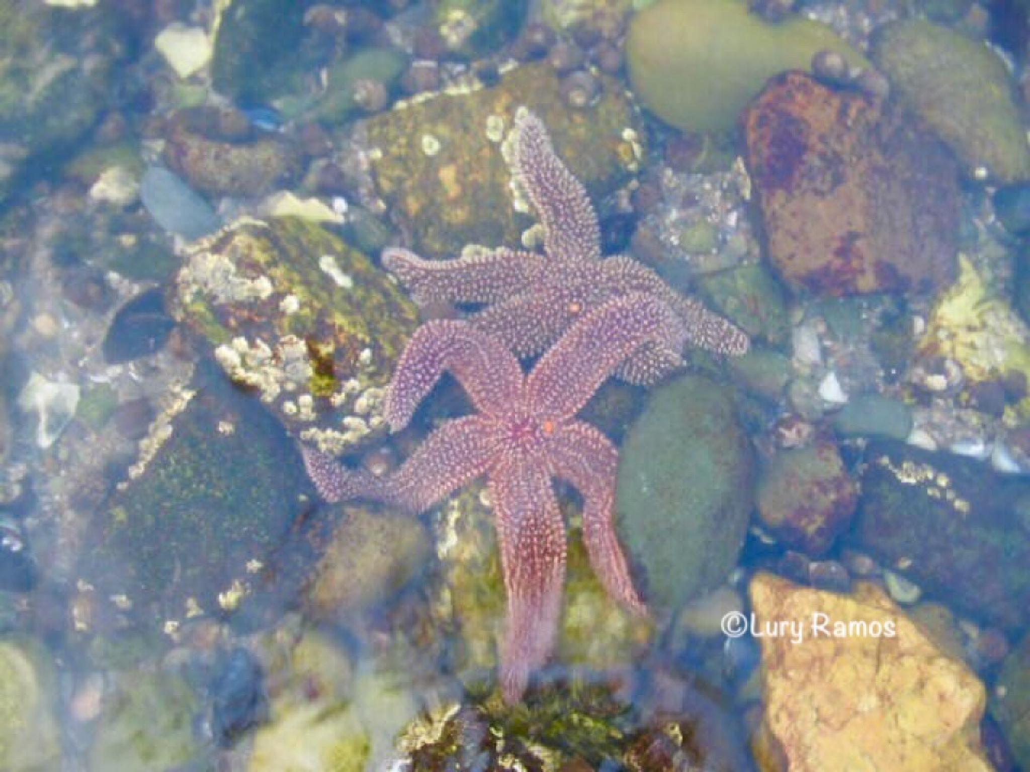 Underwater Starfish by Lury Ramos