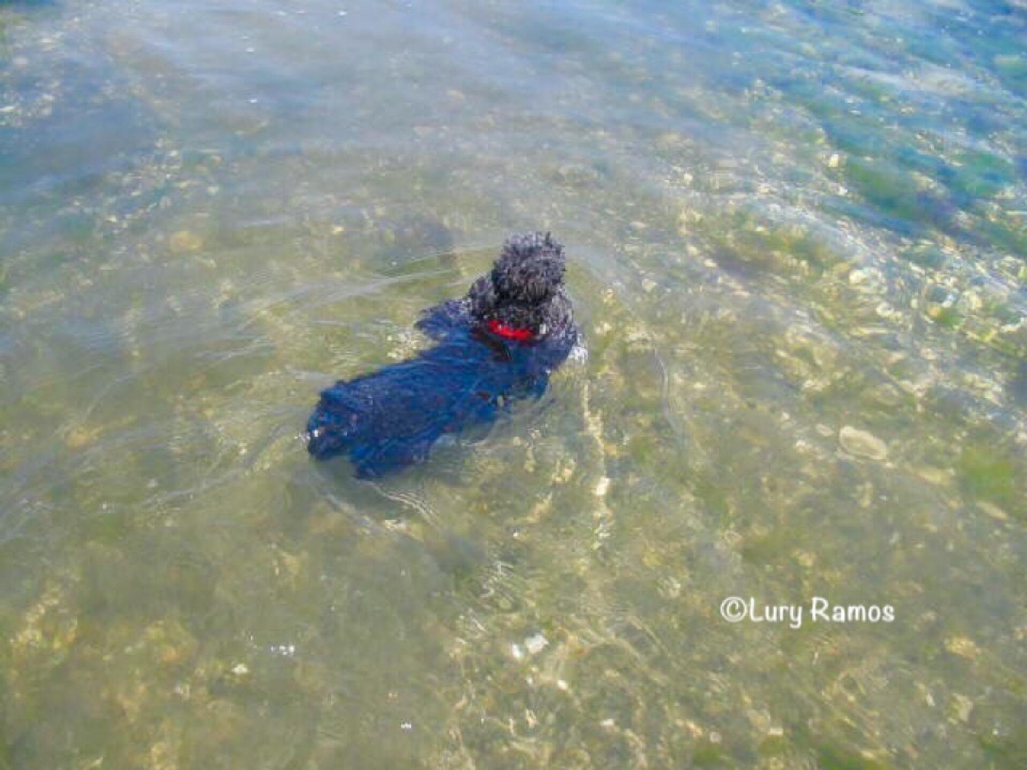 Oreo Nannie - Swimming by Lury Ramos
