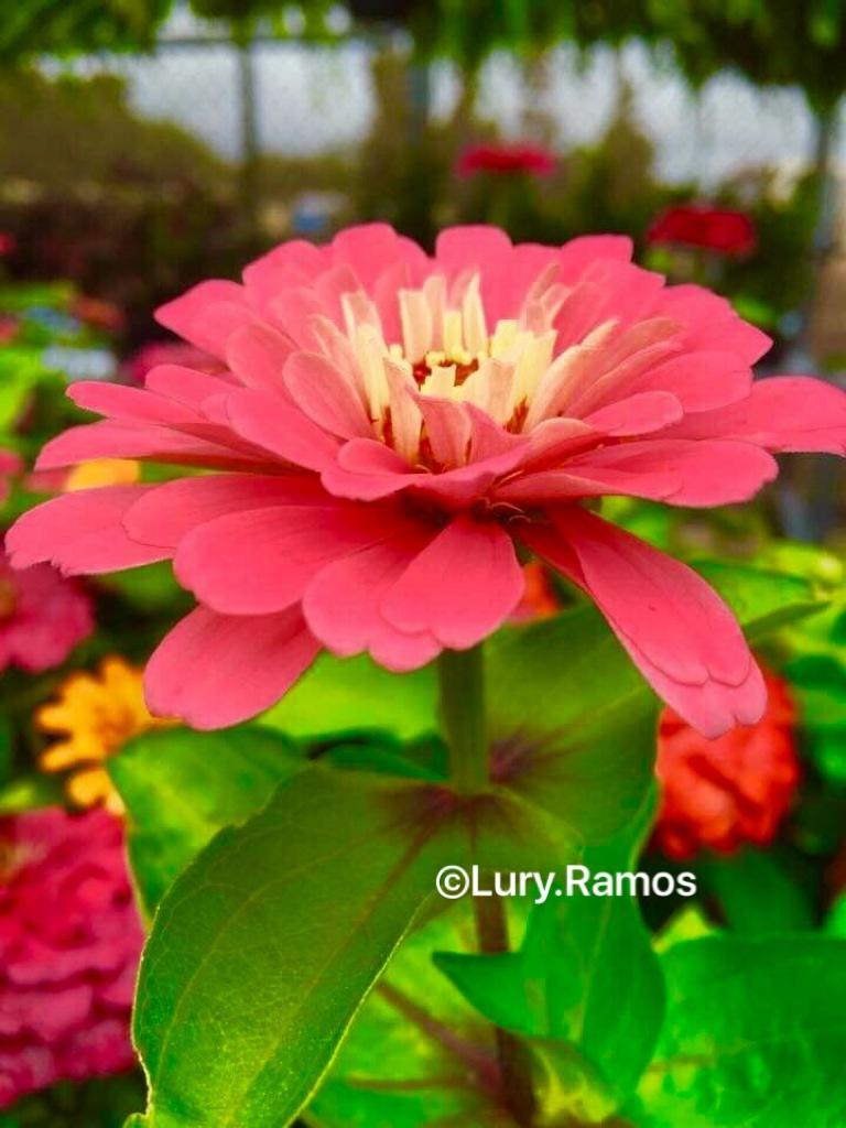 Look at my Beauty by Lury Ramos