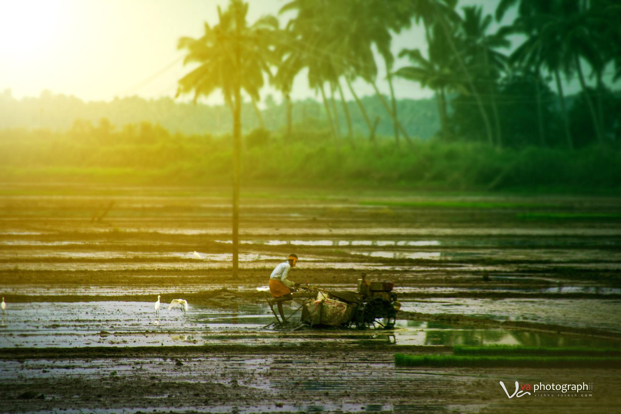Vayal by Vishnu Suresh