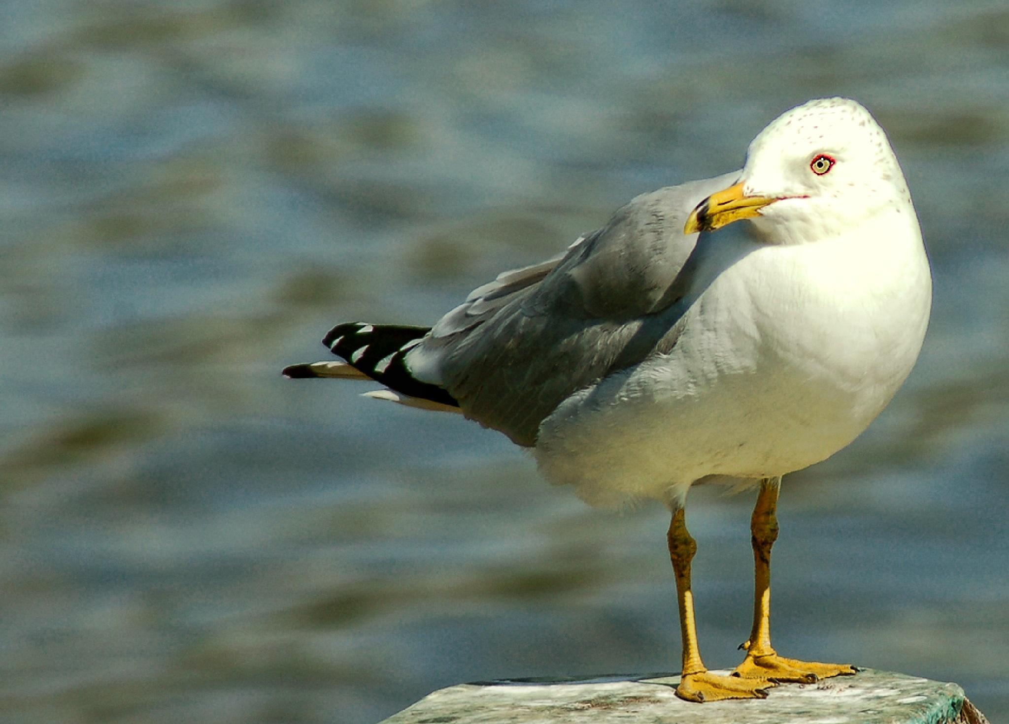 Bird on a post by Vonda B. Magill