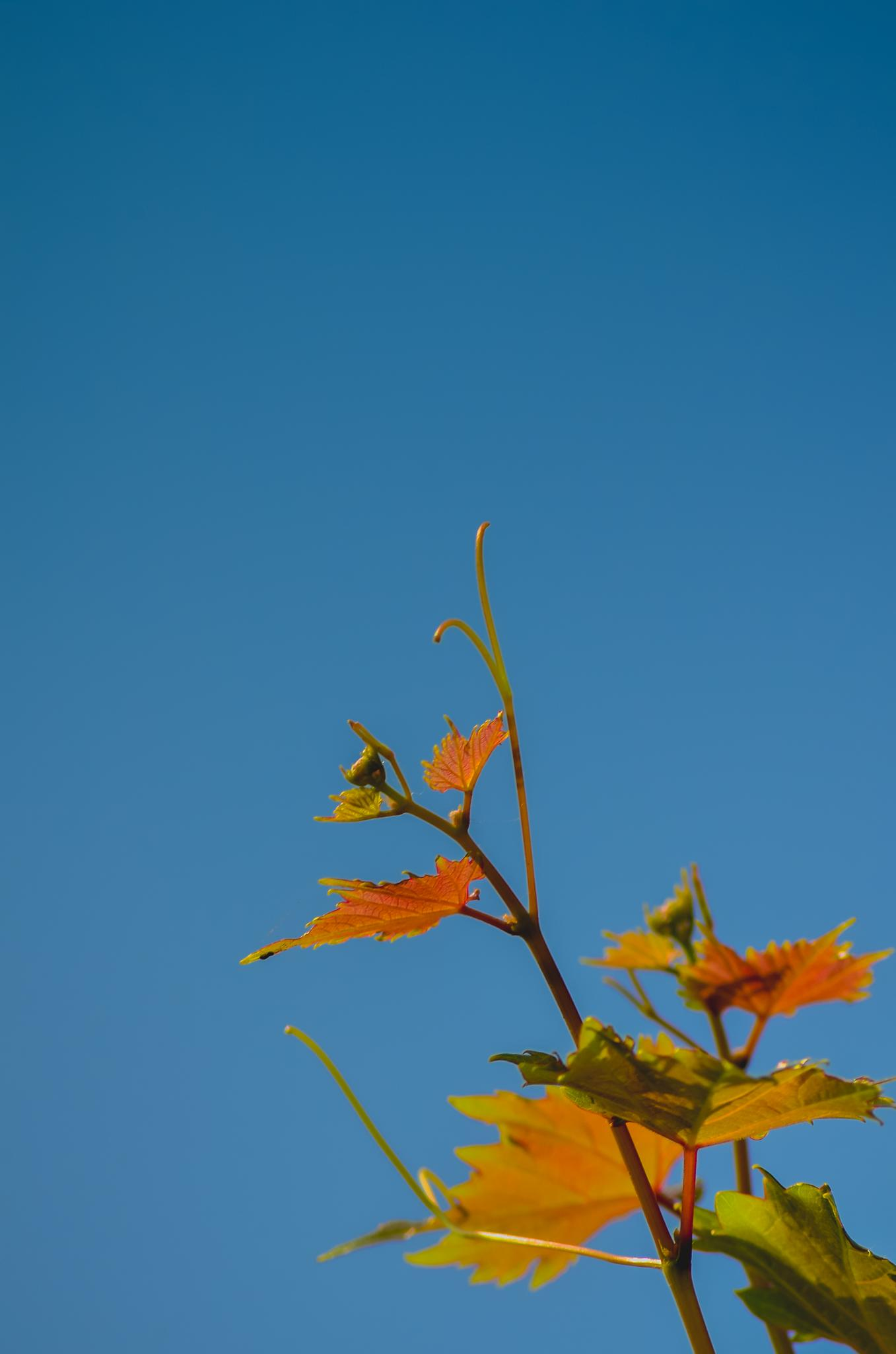 Leaf by eagleeyes1717