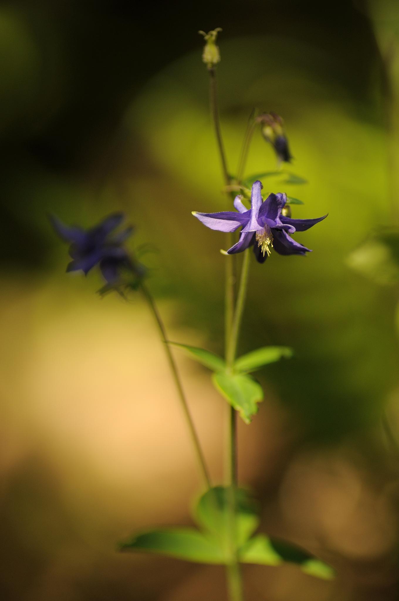 Purple by jonas.andreasson.9