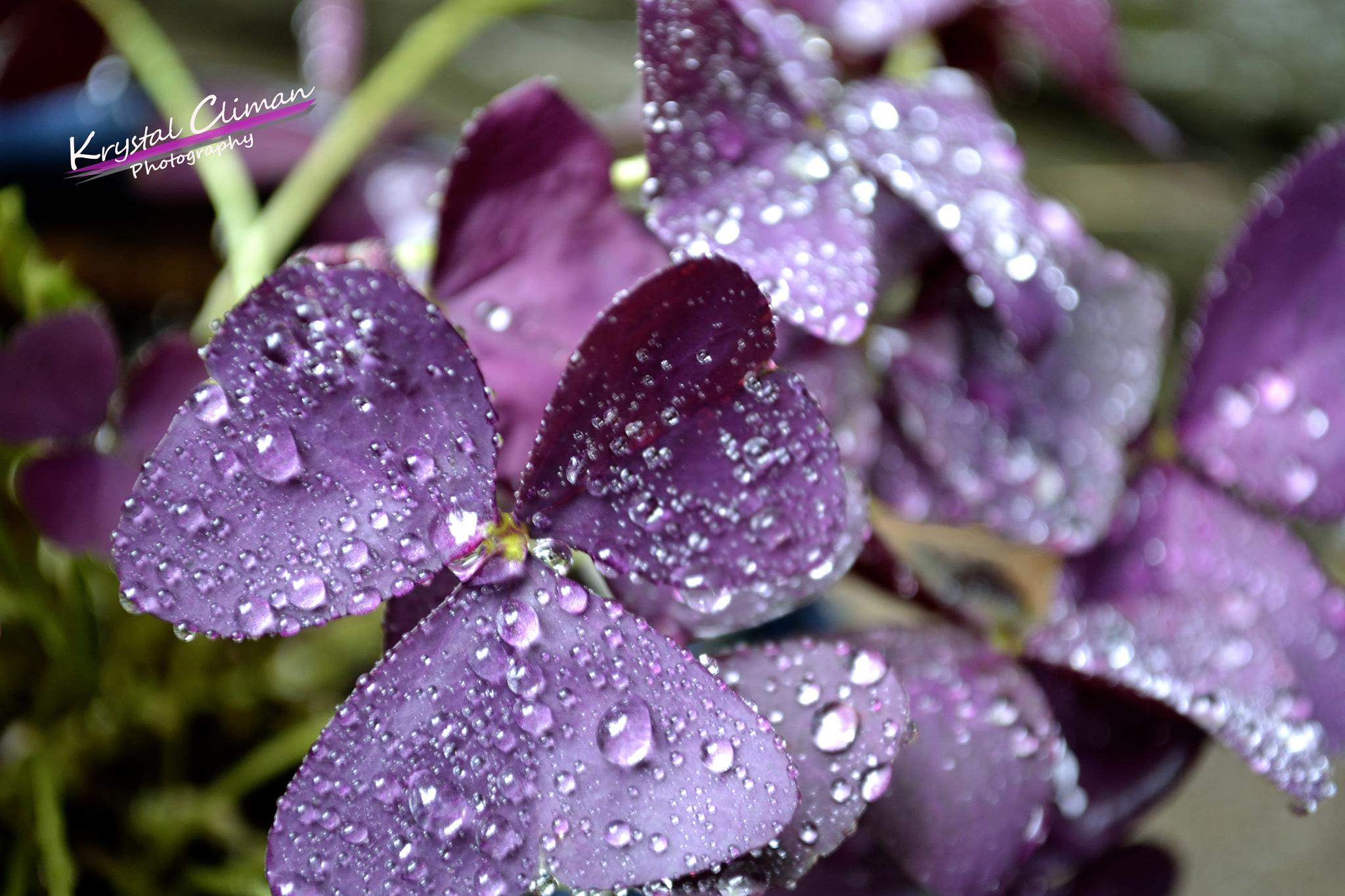 Droplets by Krystal Climan