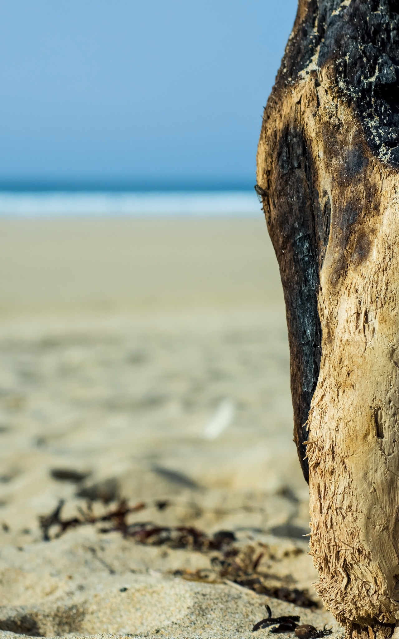 Burnt driftwood by MADOLDIE