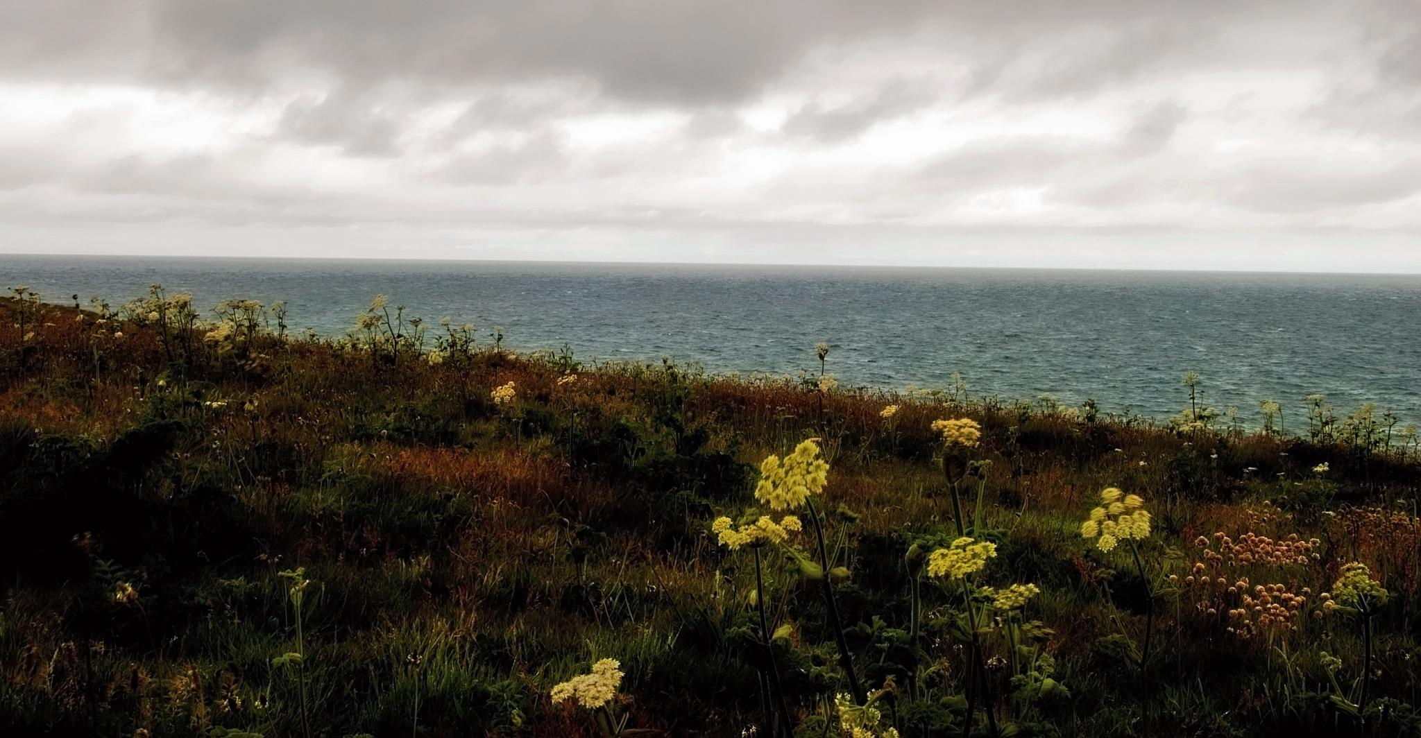 Flowers by the sea by MADOLDIE