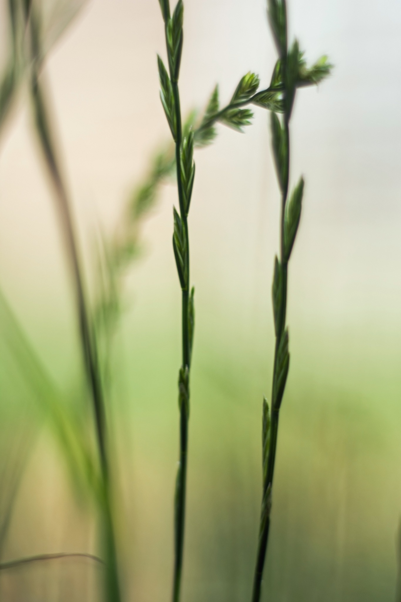 Growing grass by MADOLDIE