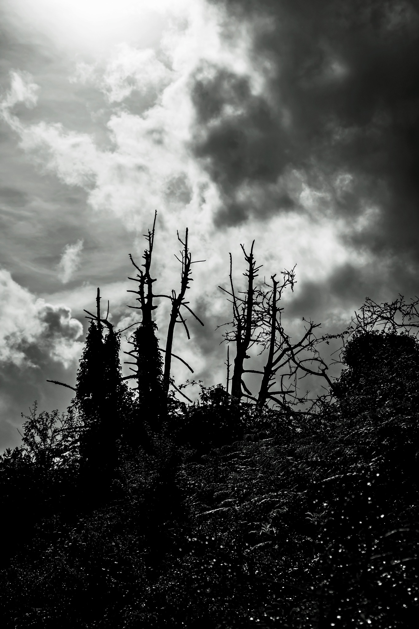 Dead trees by MADOLDIE