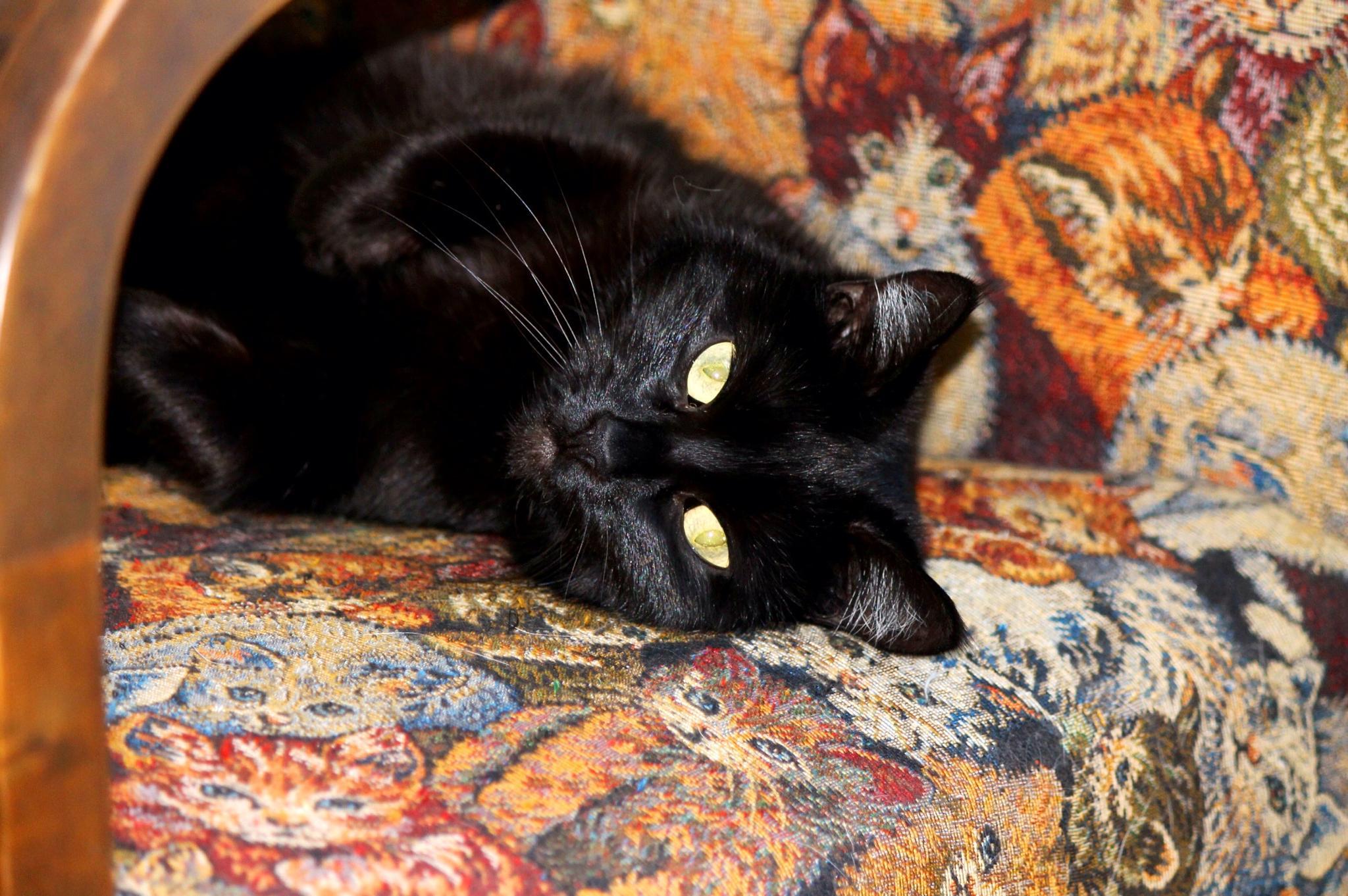 My cat Hera by ledbrink