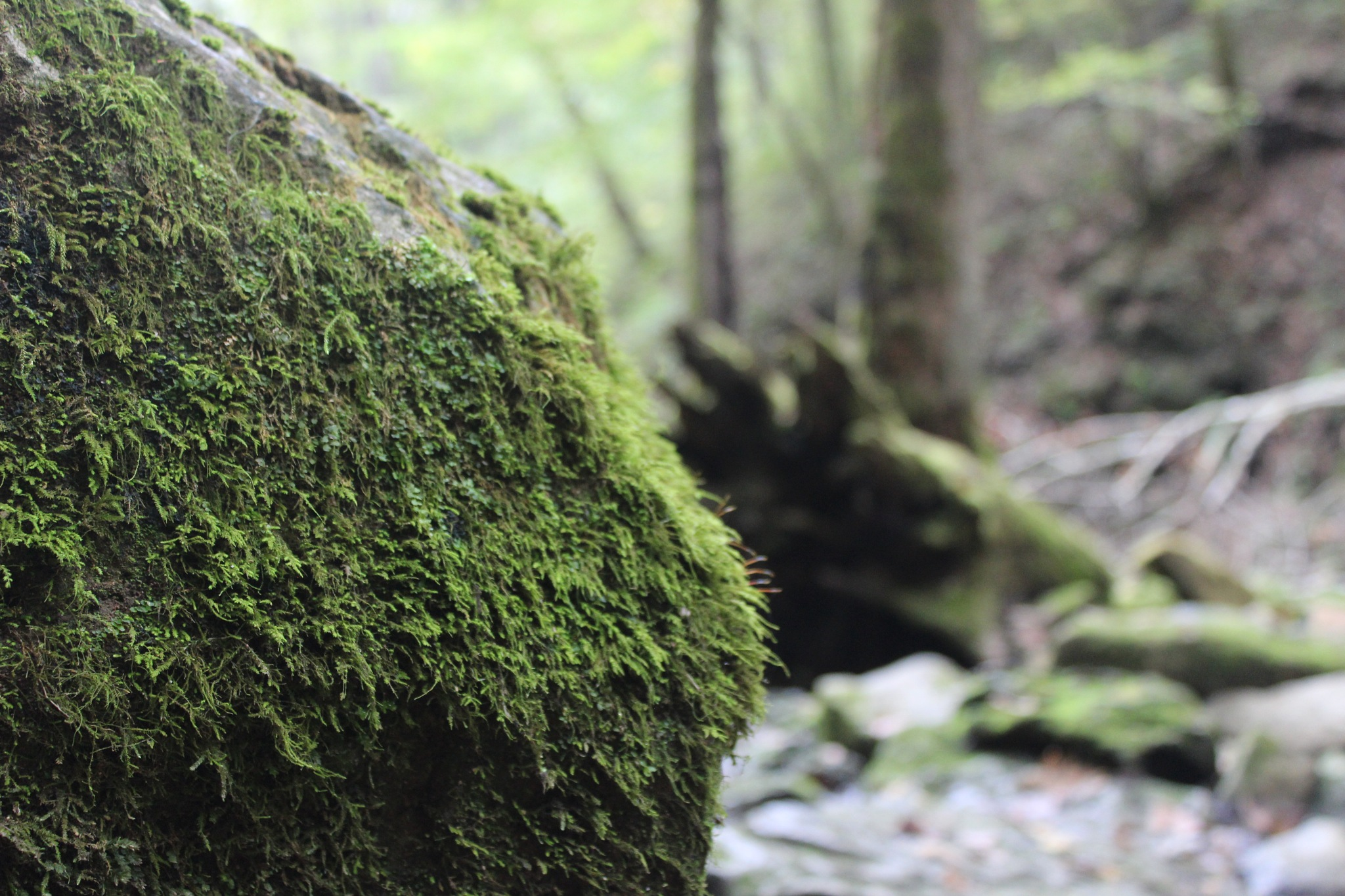 Moss Rock by Perry, JA