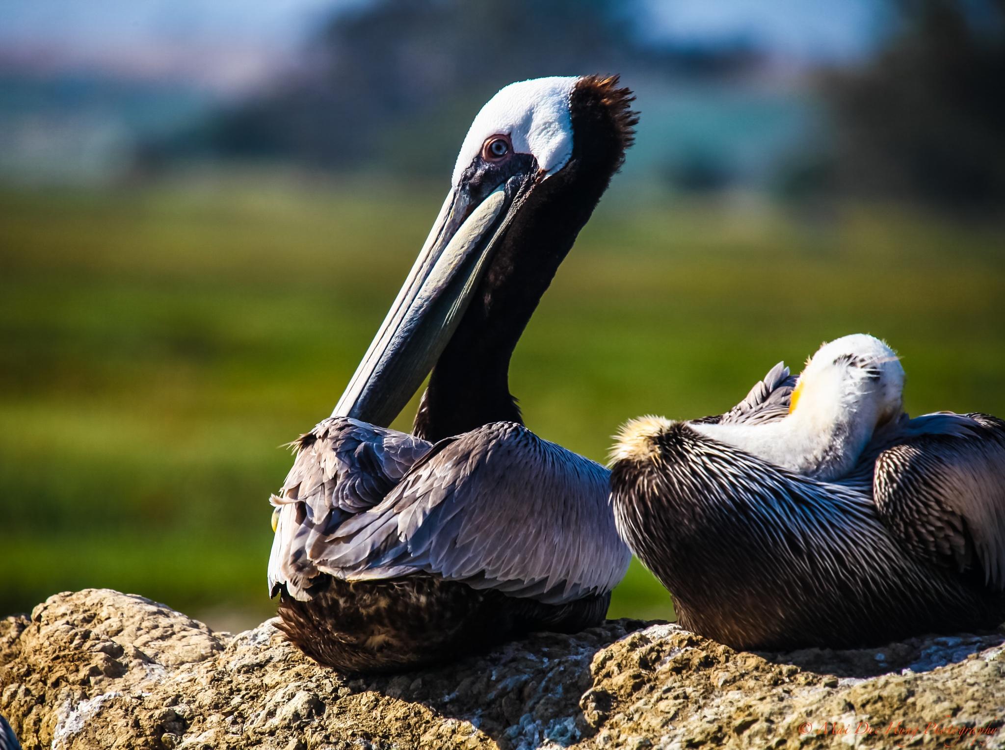 Birds! by alandmai