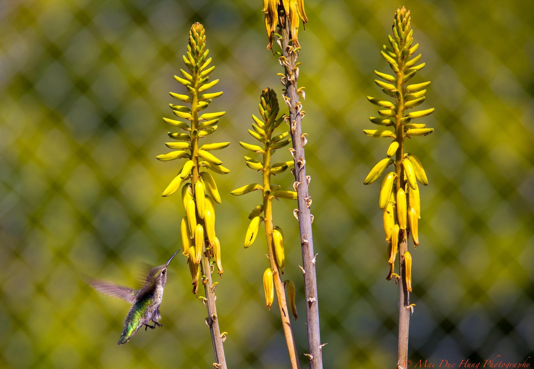 Bird from my yard... by alandmai