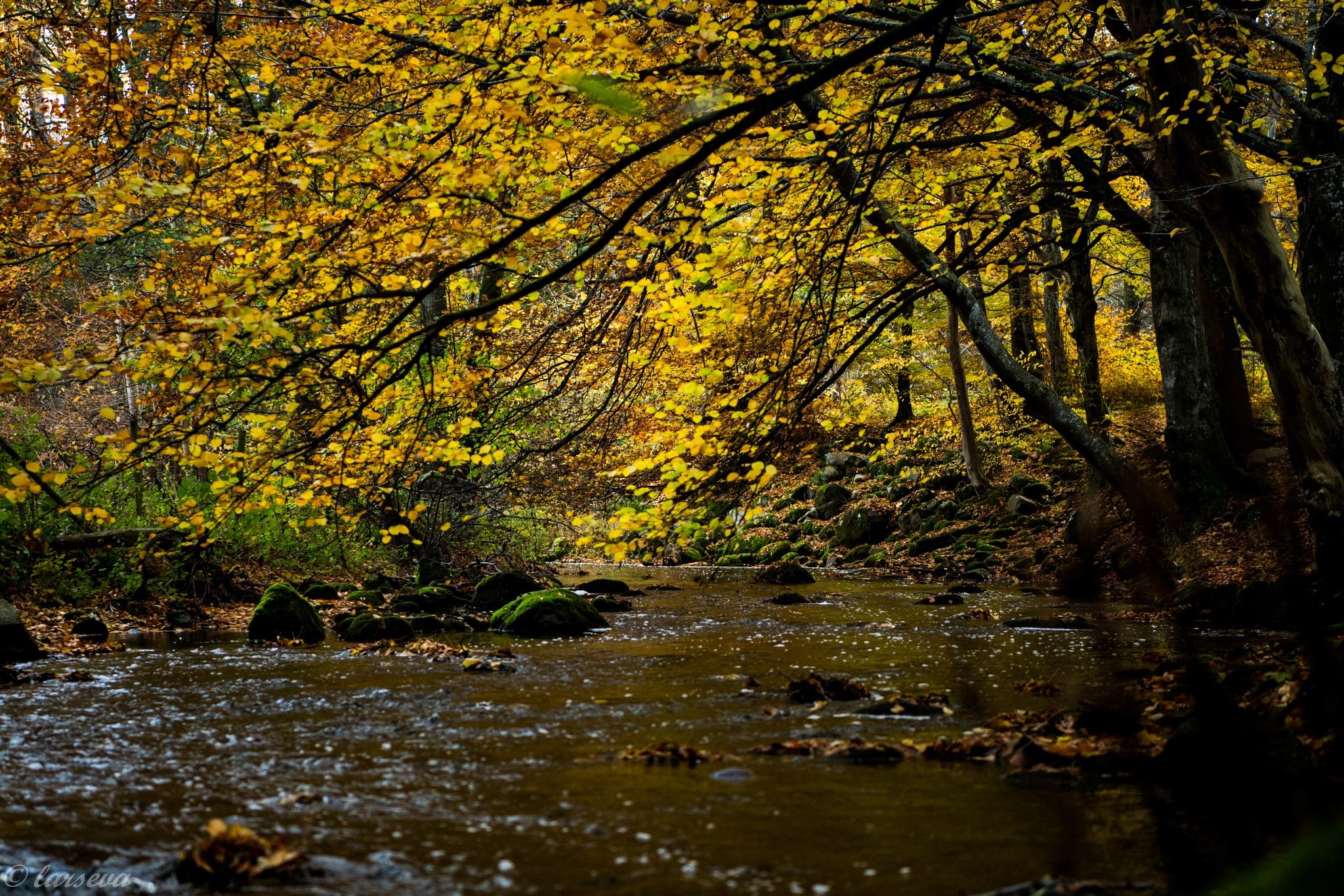 autumn in Sweden by lars-goran6