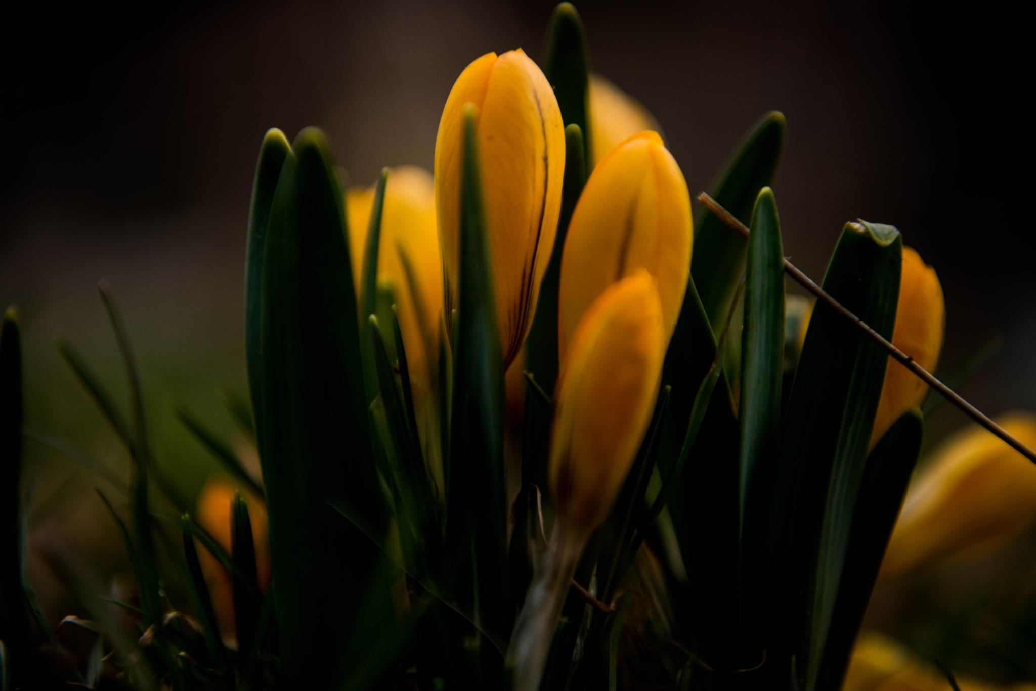 spring   by lars-goran6