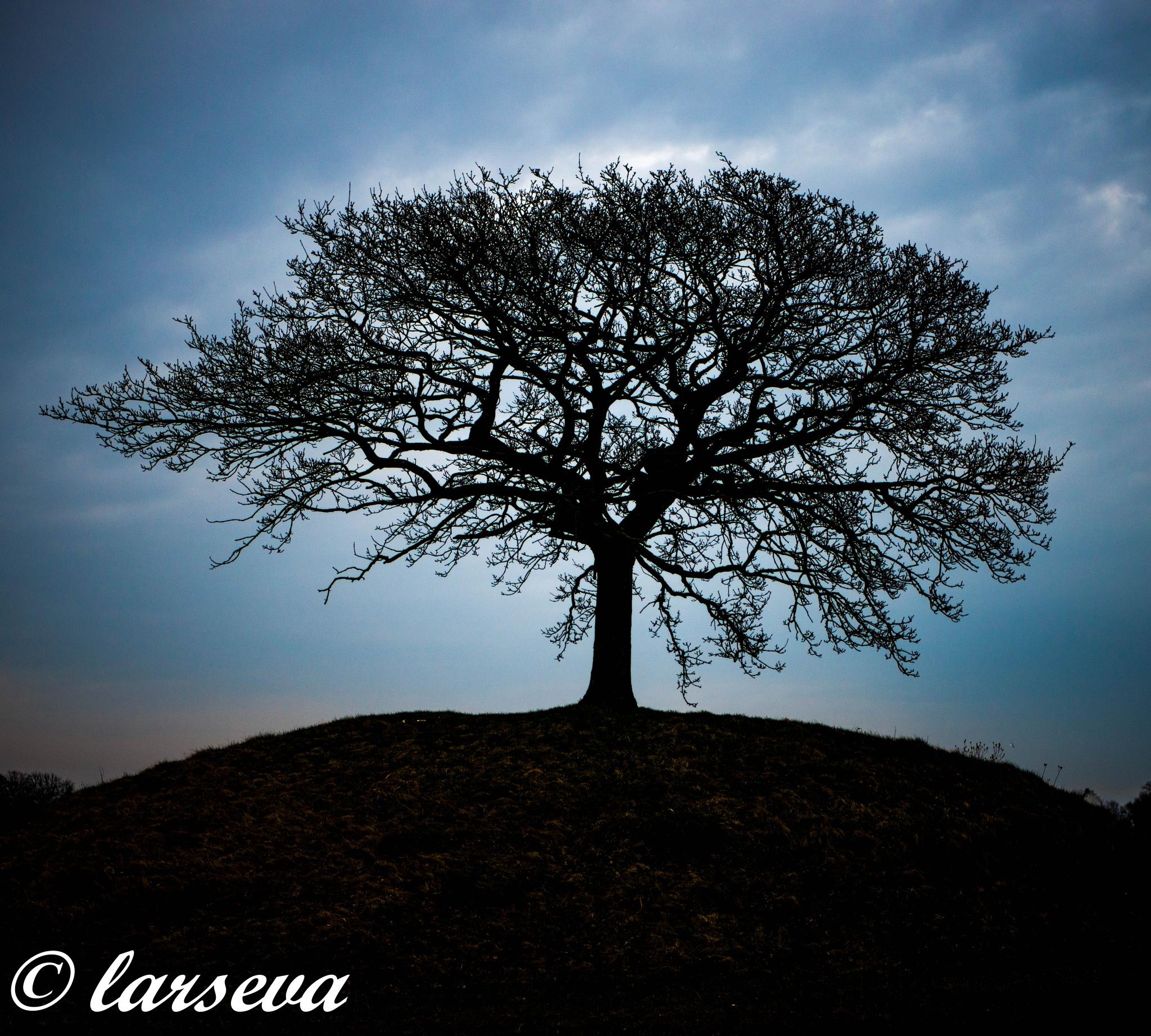 a lonley tree by lars-goran6