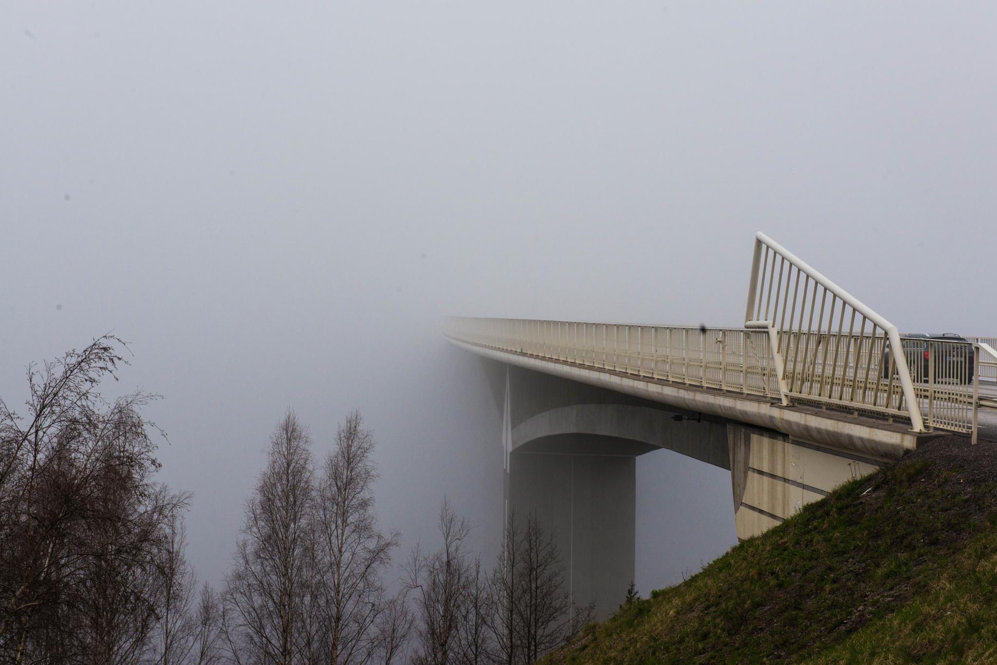 in to the fog  by lars-goran6