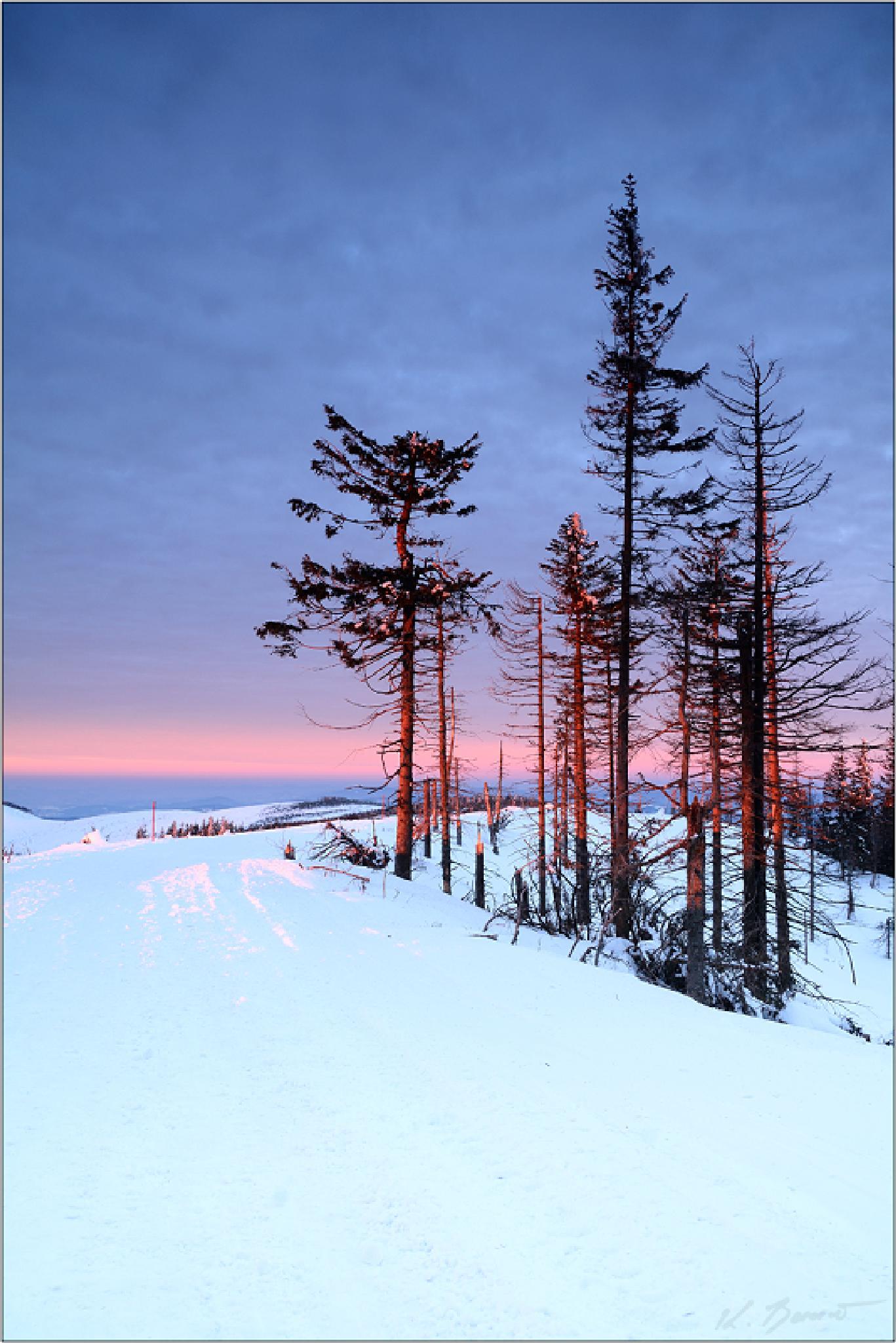 Winter by Krzysiek Banot