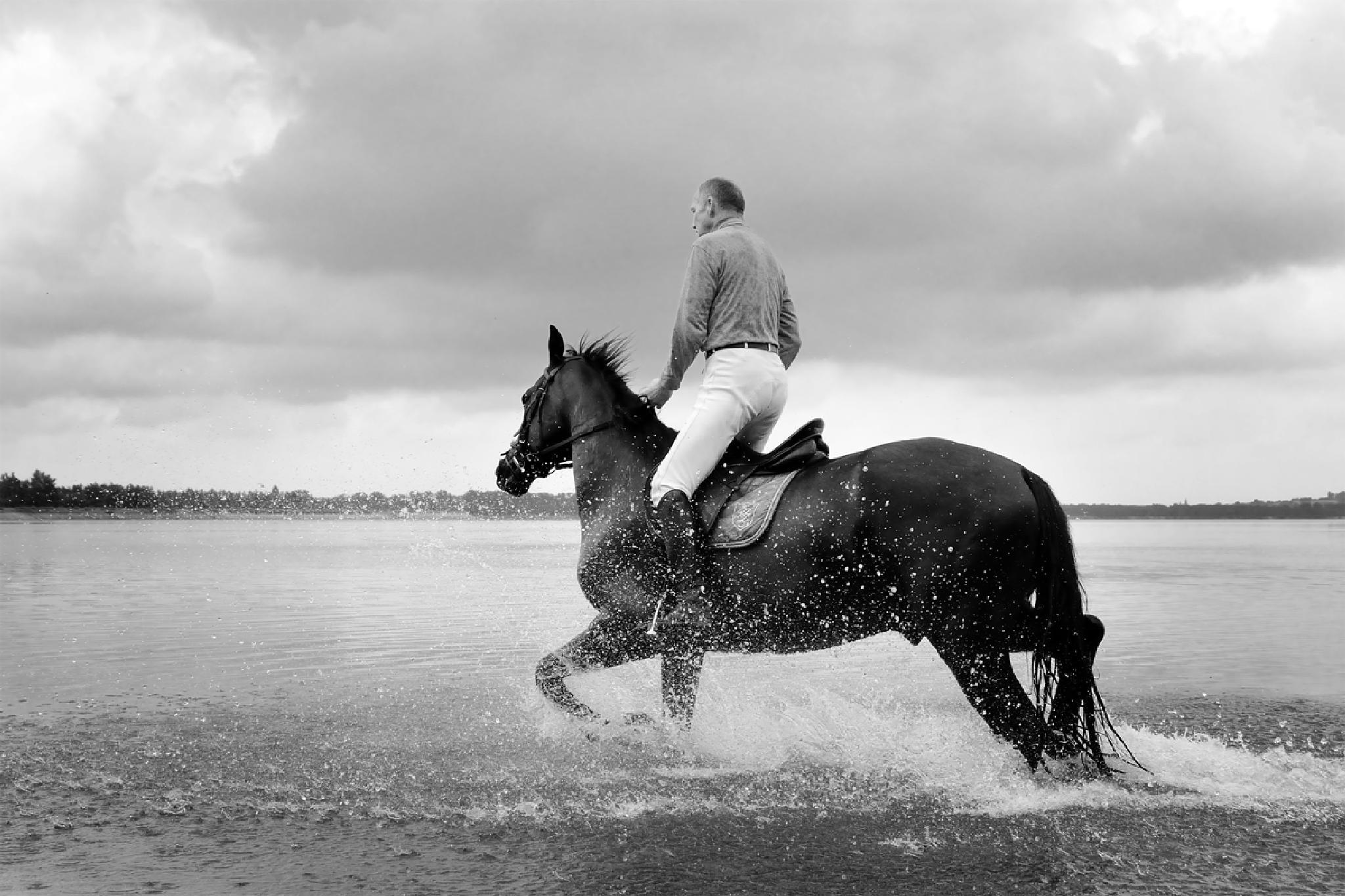Photo in Animal #horse #silesia #poland