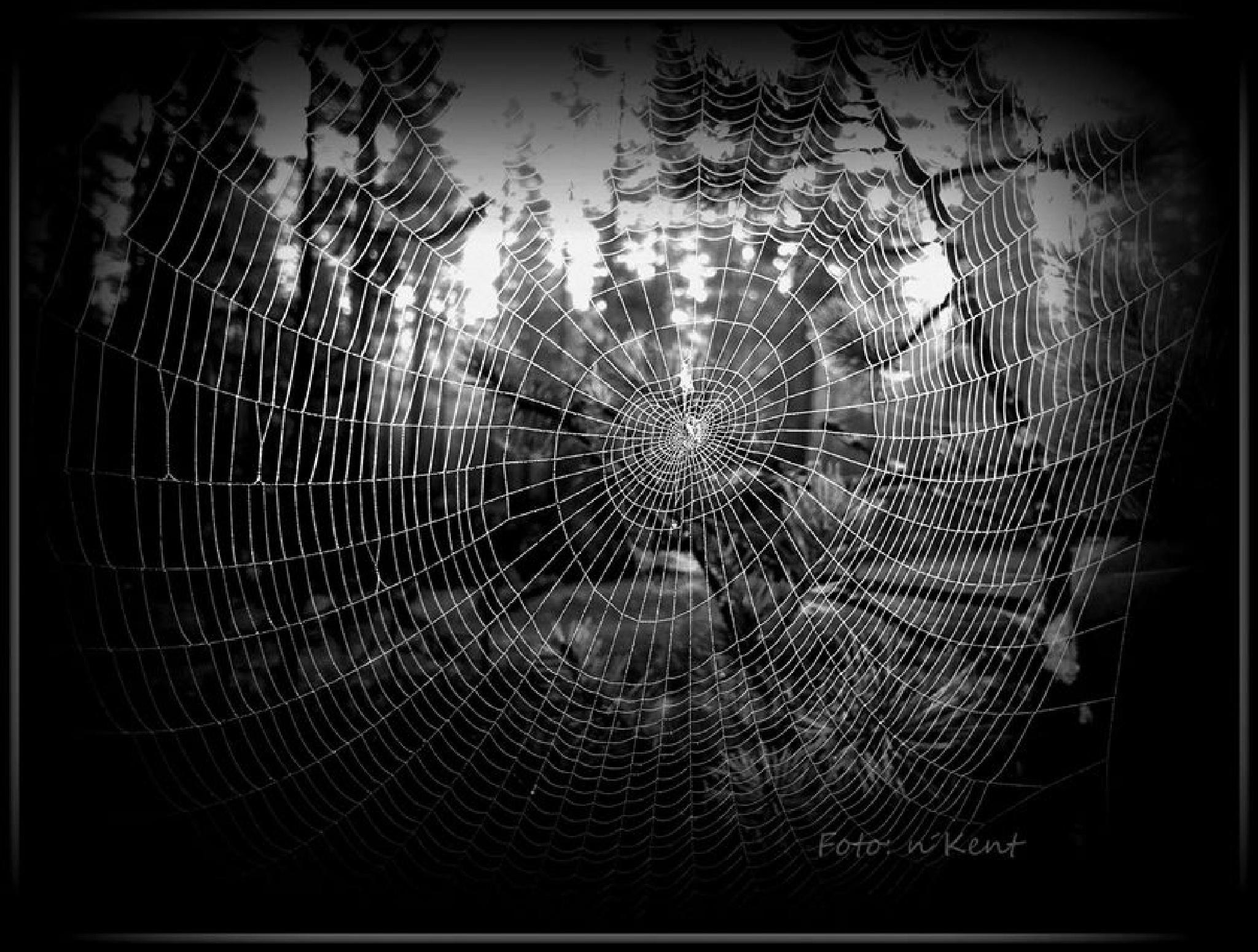 World Wide Web? by nKentK