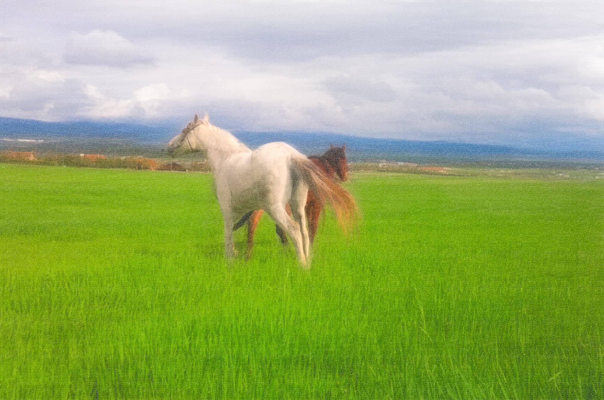 Horses by LutfuAkpulat