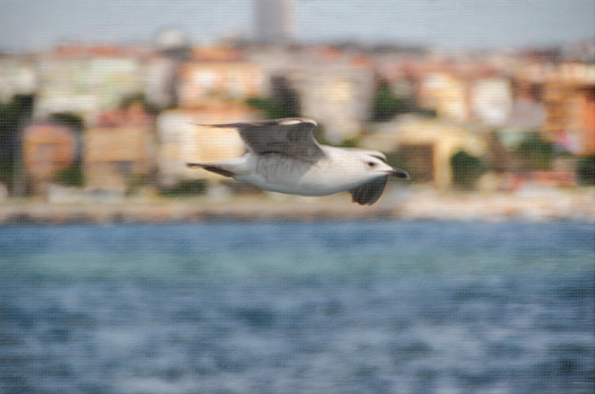 Seagull by LutfuAkpulat