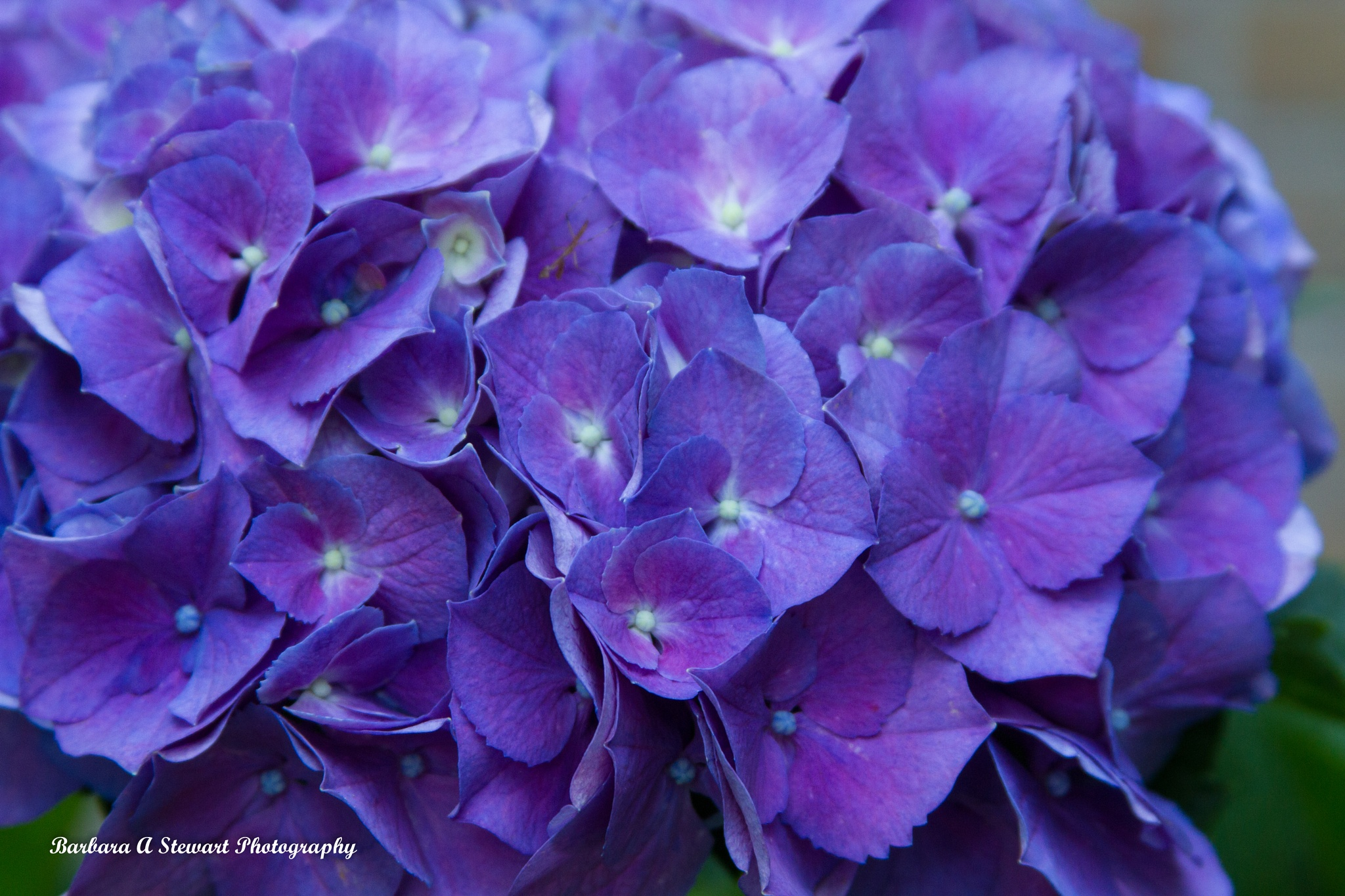Close up tiny flowers by barbbe4024