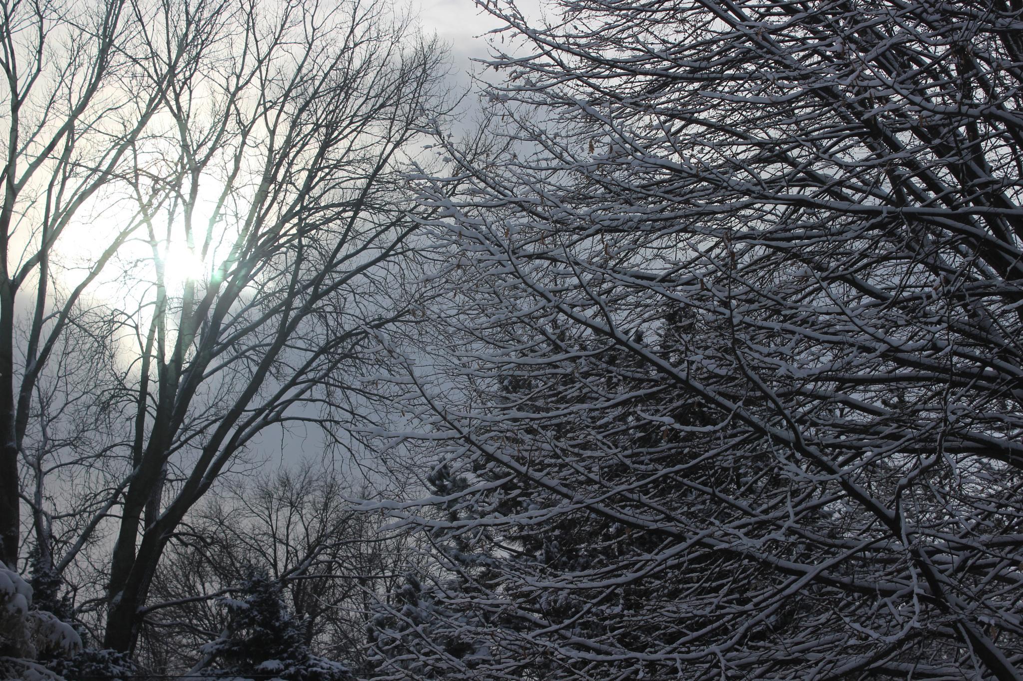 Winter Solice by renee.r.hofmann