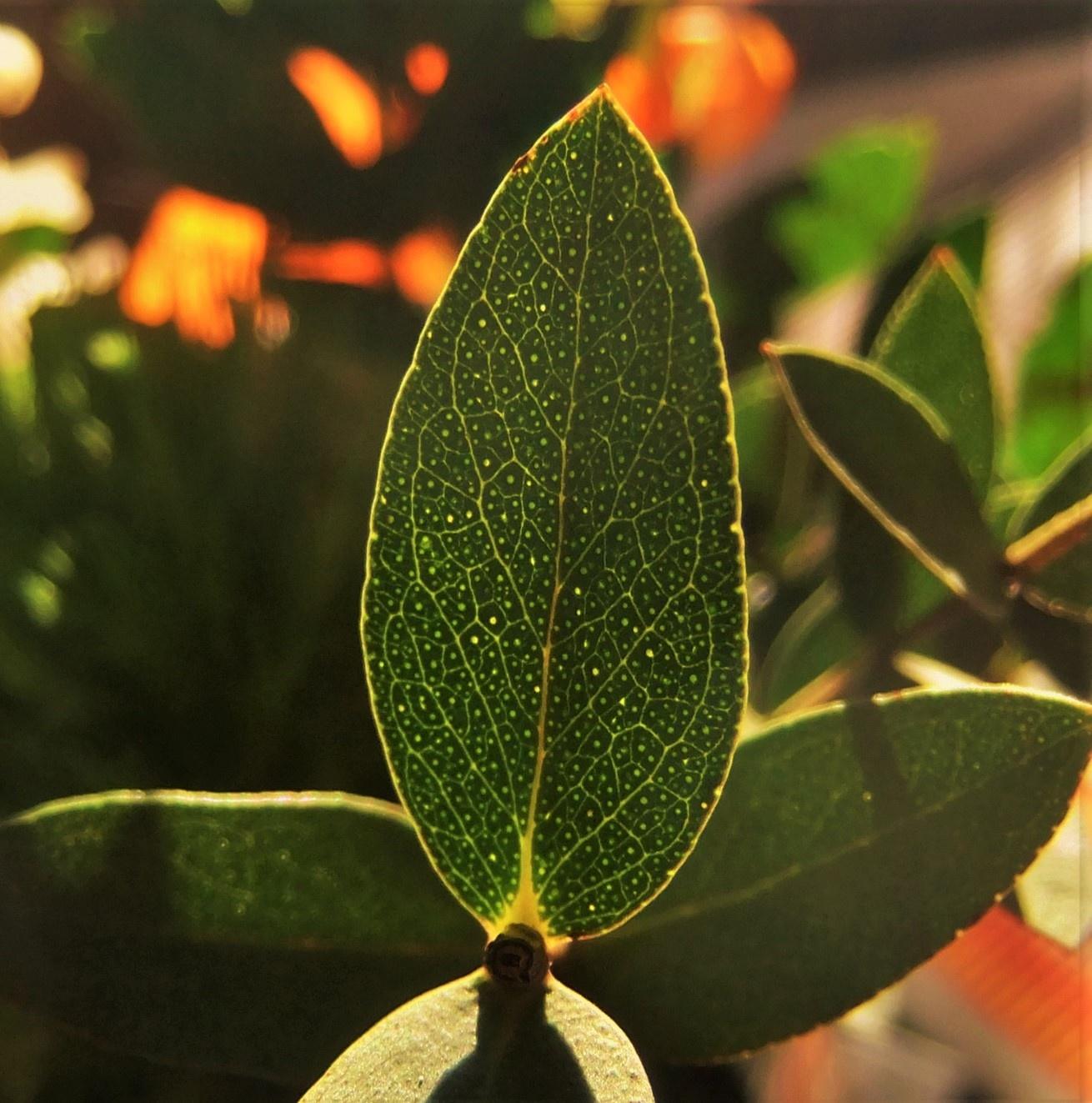 Leaf-Macro by Oliver Neumann
