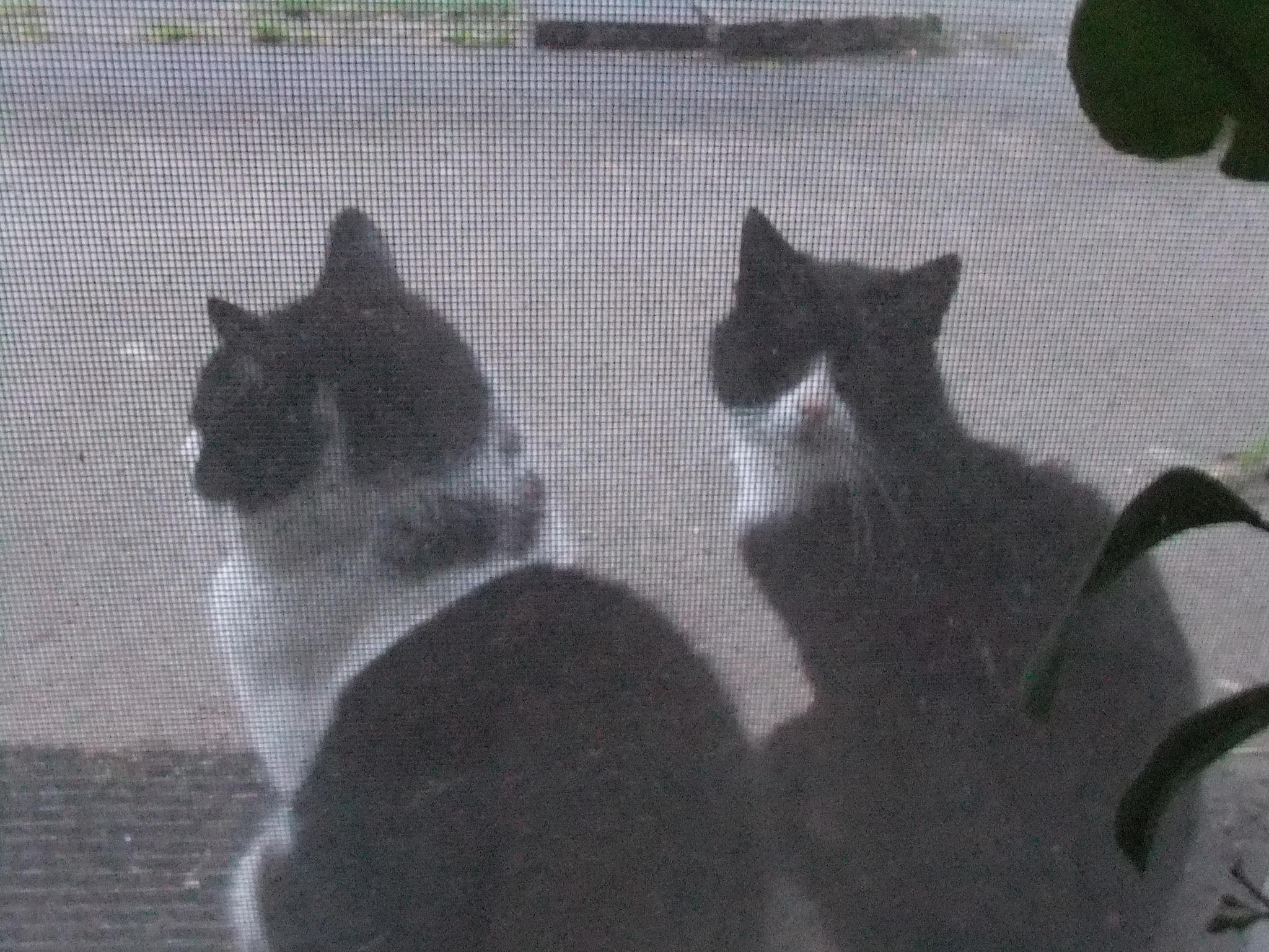 2 cats behind a screen door by Oliver Neumann