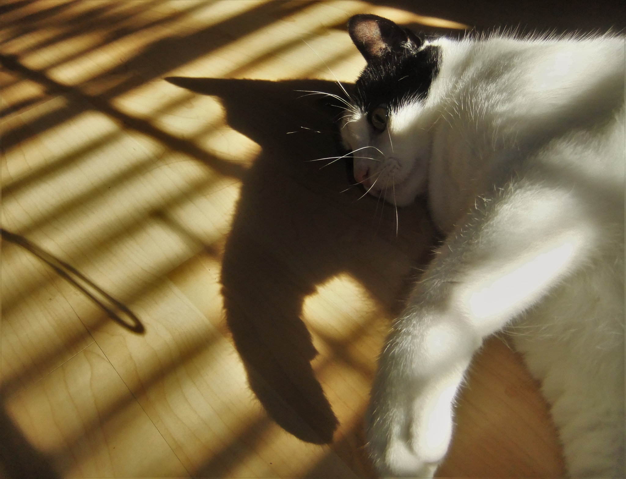 Cat & Shadow by Oliver Neumann