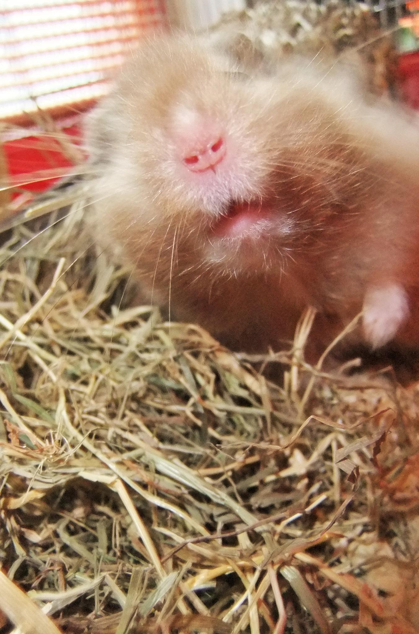 bear hamster little nose by Oliver Neumann